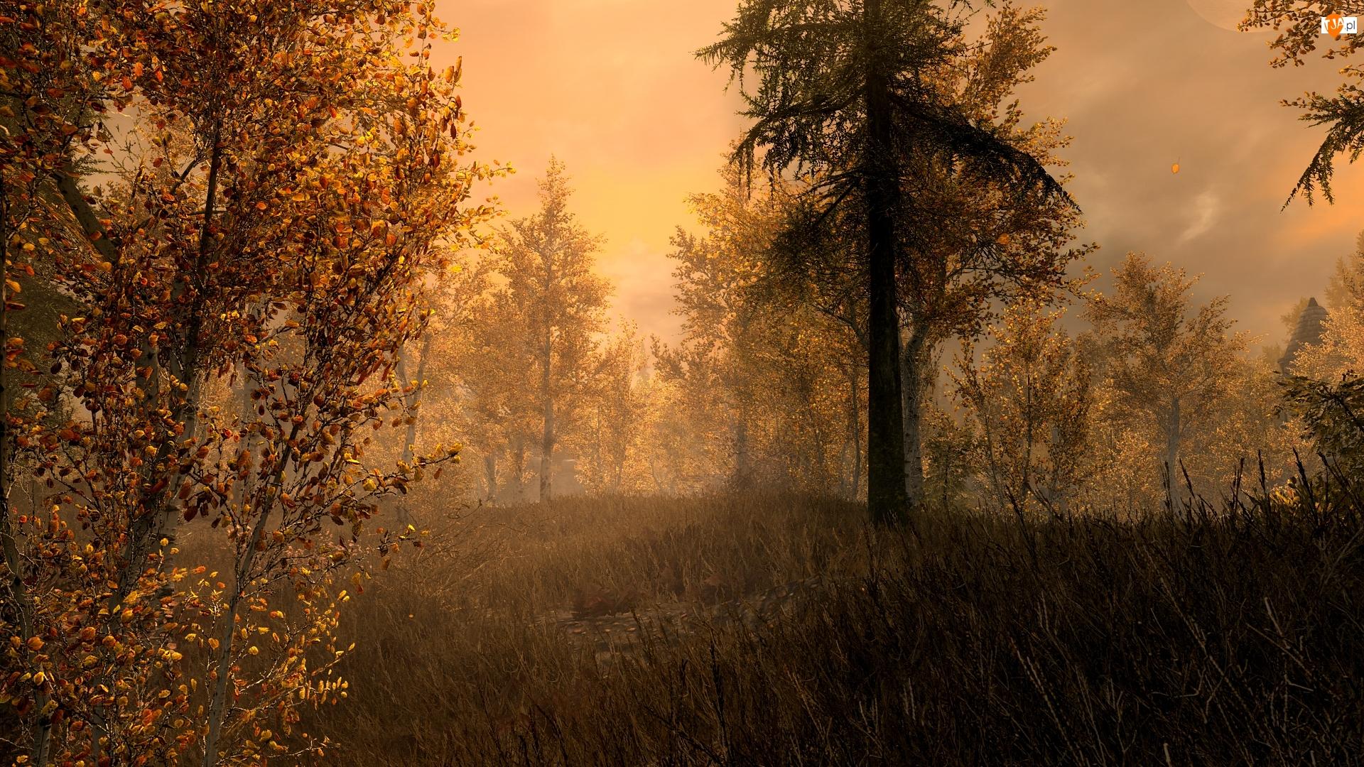Drzewa, Gra, Jesień, The Elder Scrolls V: Skyrim, Las
