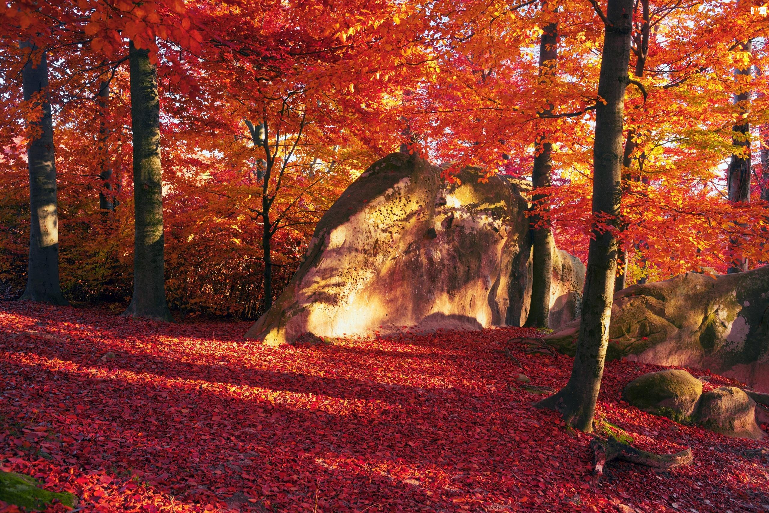 Liście, Las, Karpaty, Ukraina, Promienie słońca, Jesień, Skały
