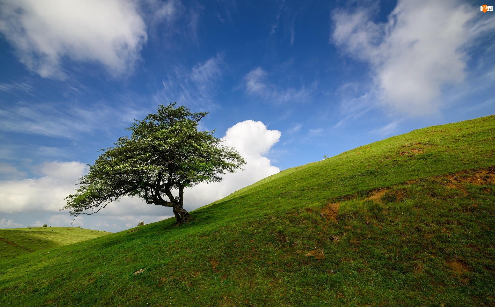 Drzewo, Pole, Wzgórze