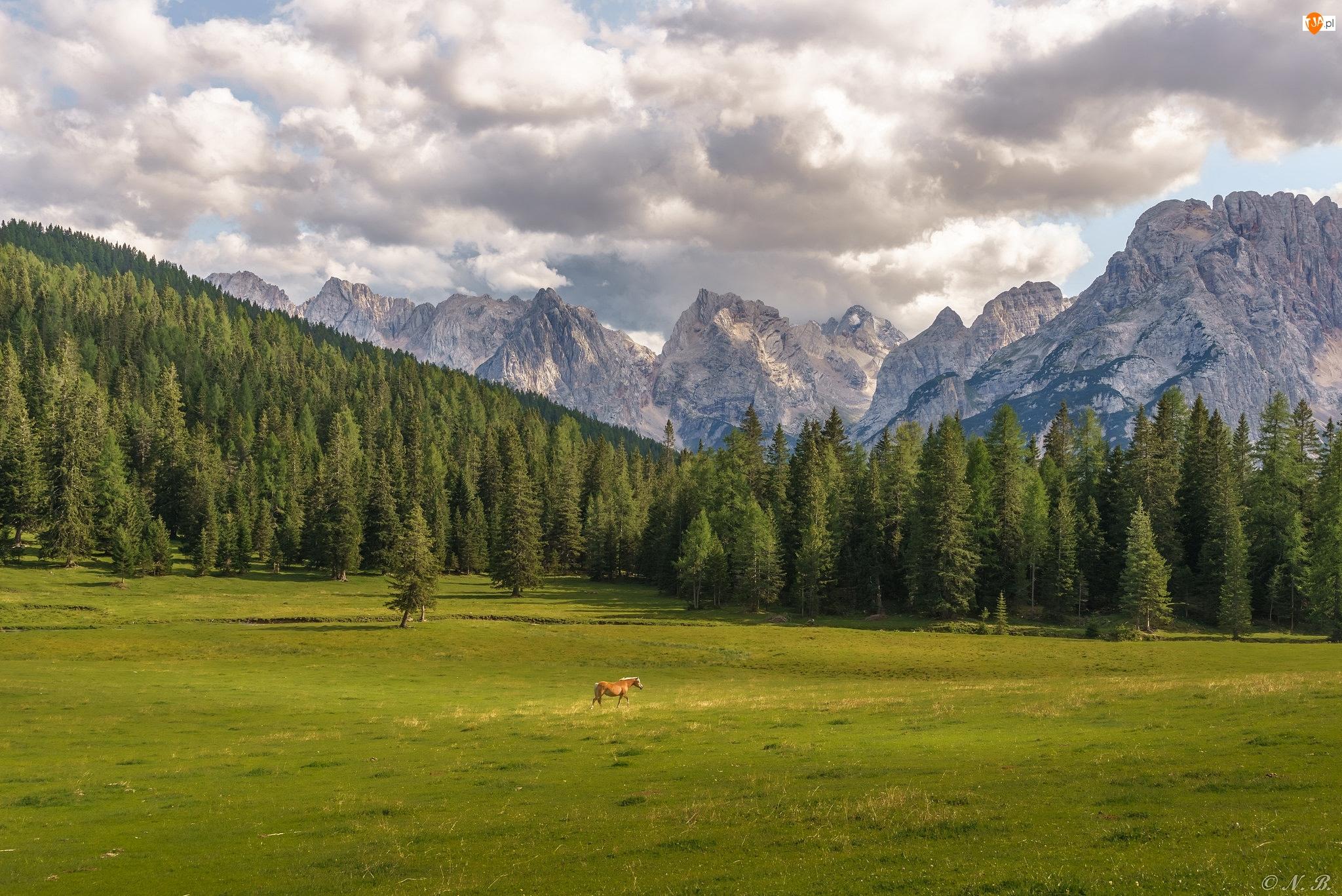 Las, Masyw Tre Cime di Lavaredo, Misurina, Włochy, Koń, Dolomity, Góry