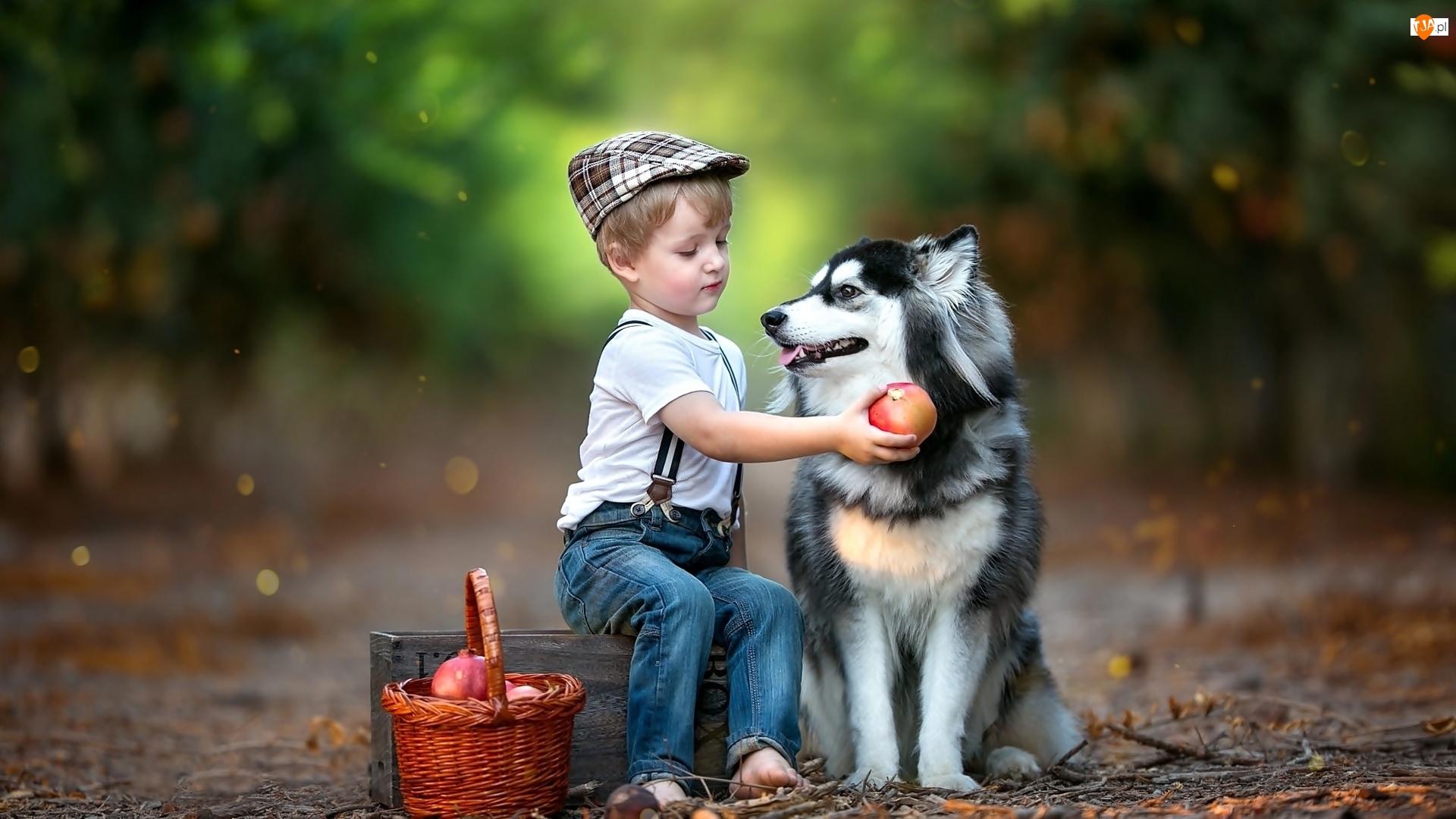 Droga, Koszyk, Pies, Chłopiec, Las, Siberian husky, Owoce