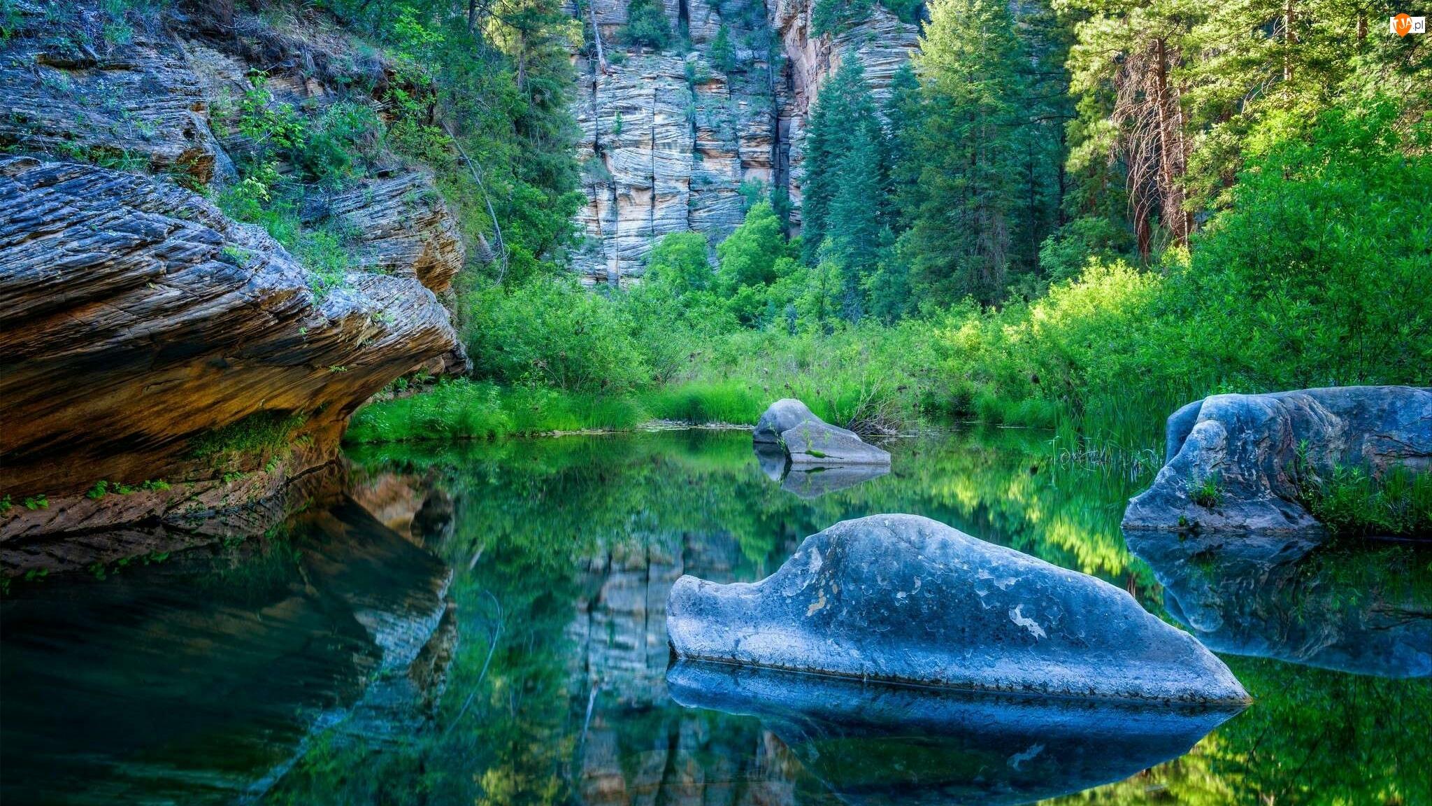 Drzewa, Rzeka Virgin, Stan Utah, Stany Zjednoczone, Skały, Park Narodowy Zion, Kamienie