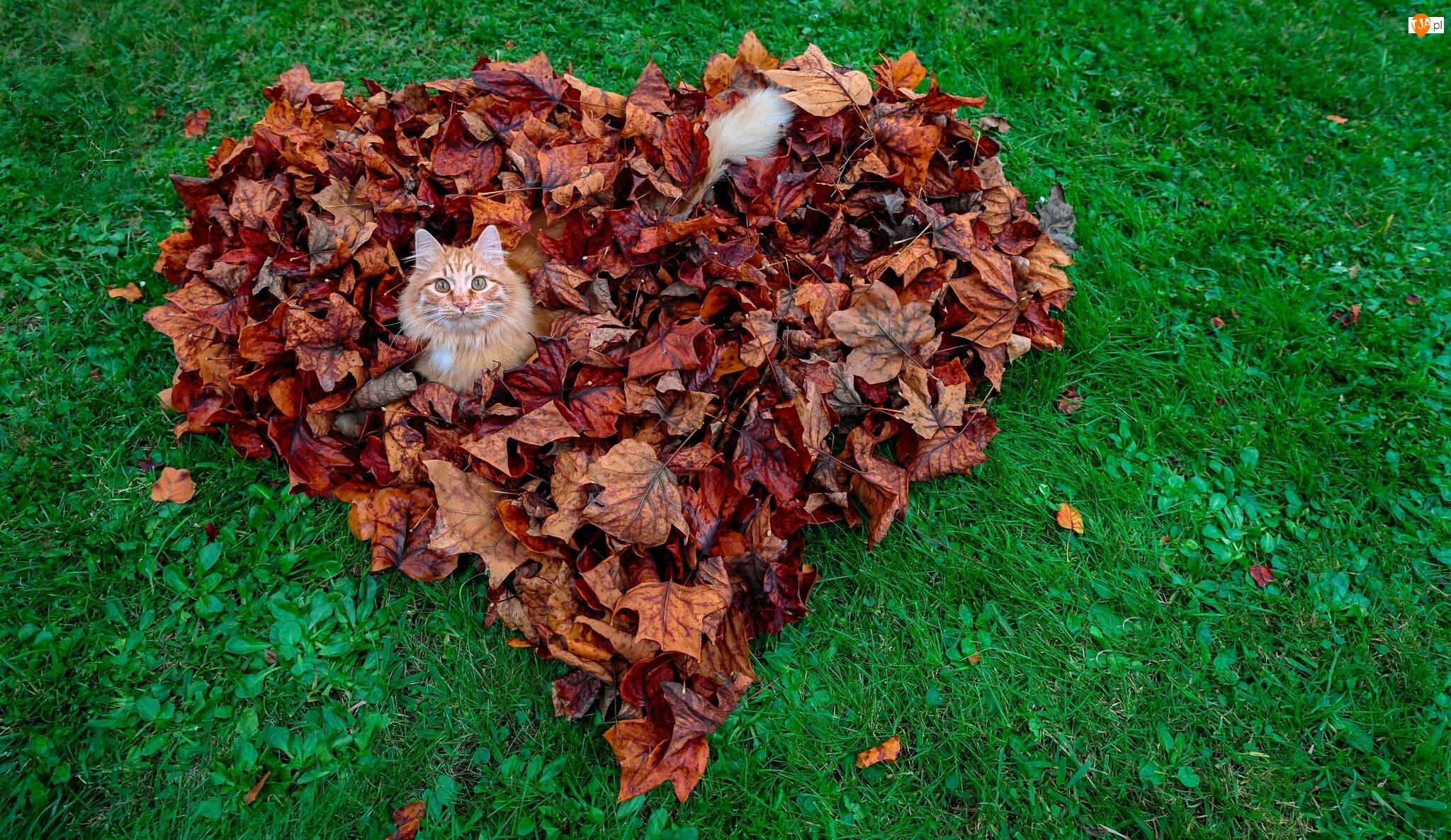Kot, Liście, Serce