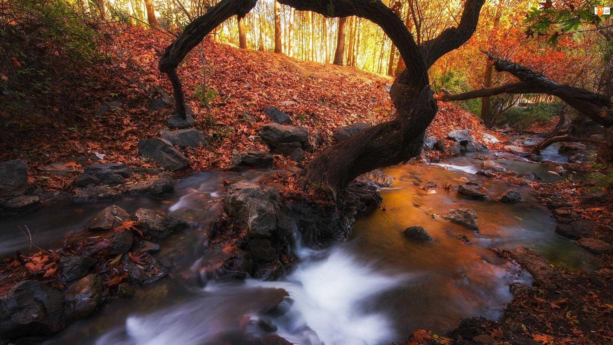 Las, Liście, Drzewa, Rzeka