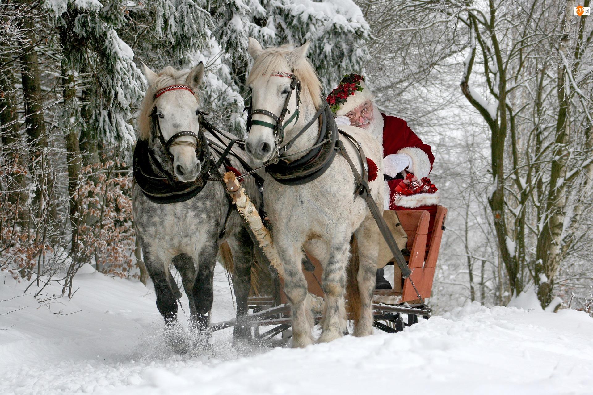 Sanie, Zima, Mikołajki, las, Święty Mikołaj, Konie