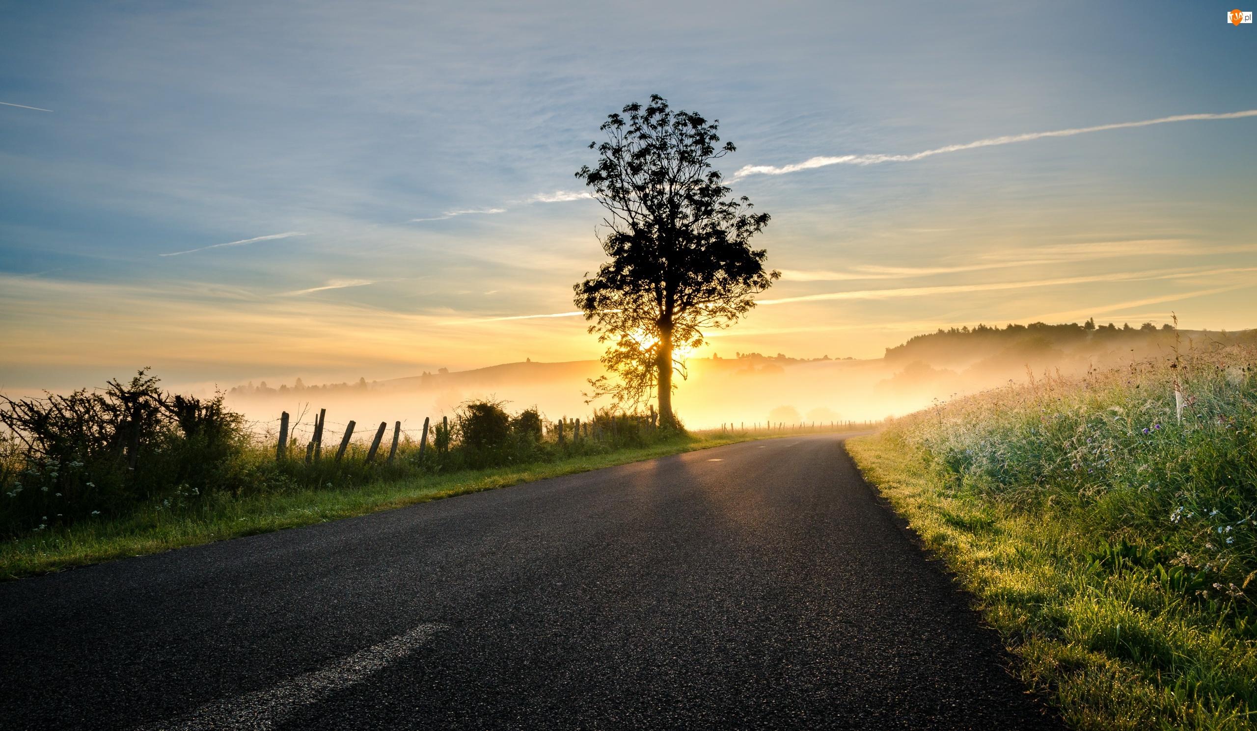 Wschód słońca, Droga, Mgła, Asfaltowa, Drzewo