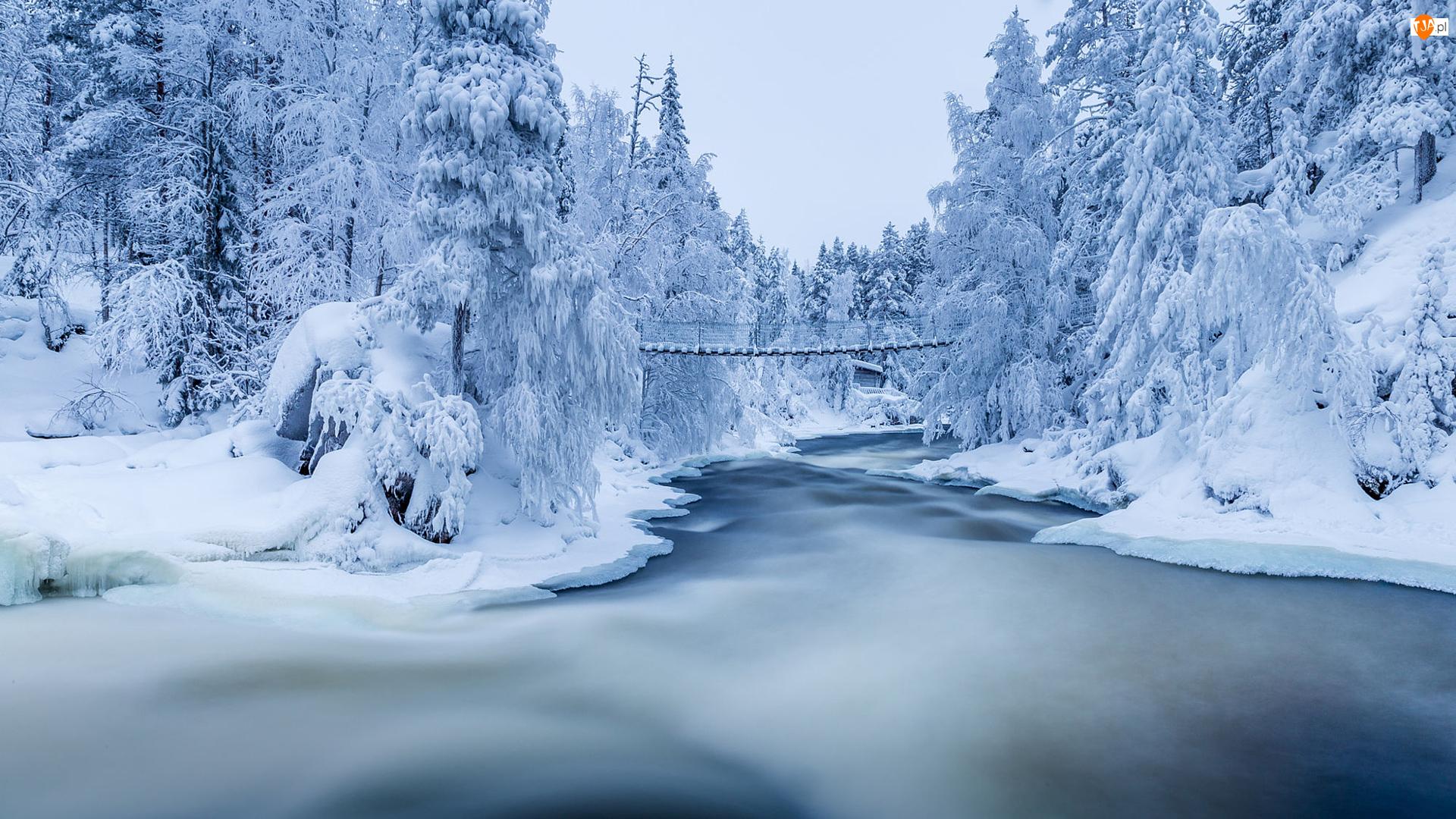 Most, Las, Zima, Drzewa, Finlandia, Park Narodowy Oulanka, Katarakty Myllykoski, Laponia, Ośnieżone, Rzeka Kitkajoki, Śnieg