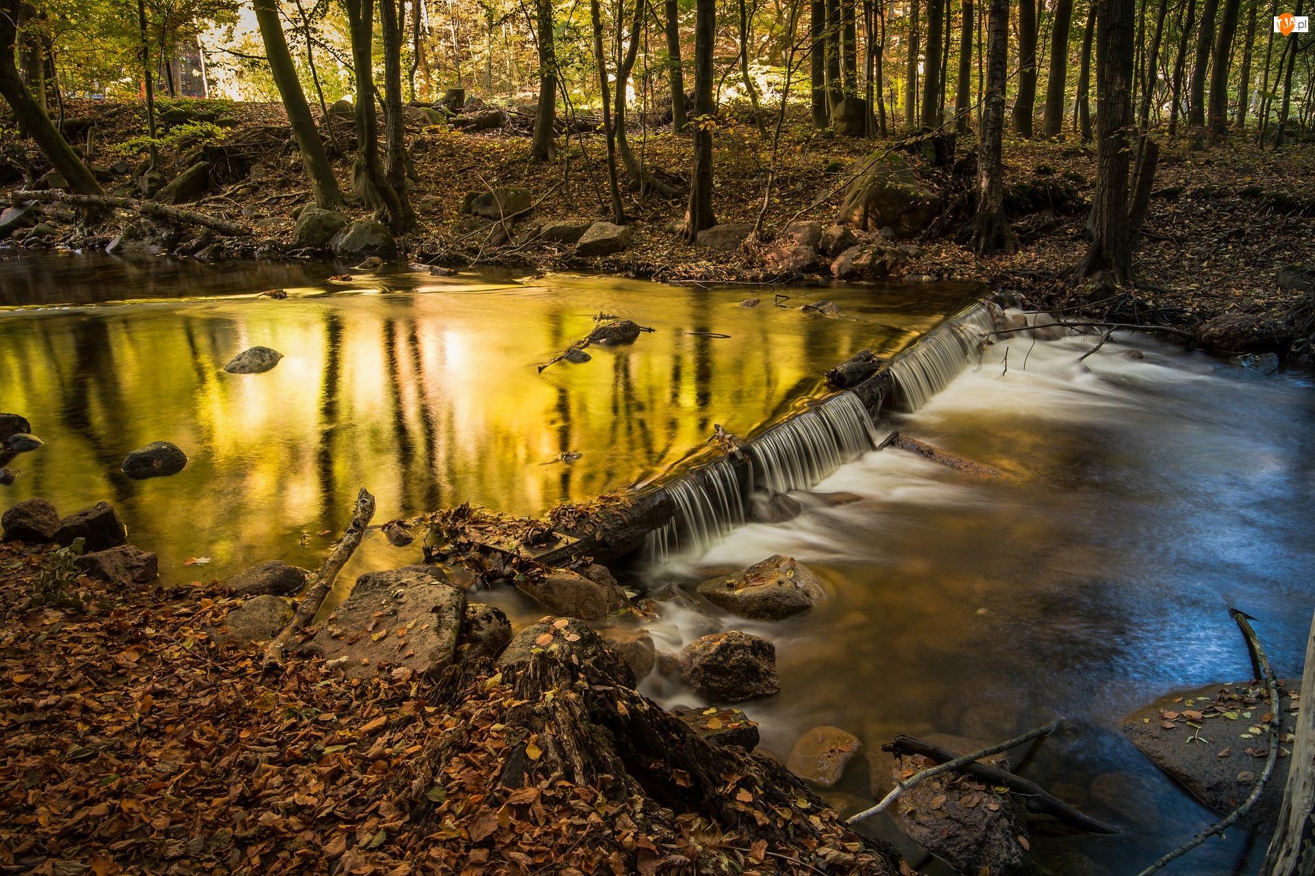 Rzeka Ilse, Jesień, Saksonia-Anhalt, Drzewa, Niemcy, Kamienie, Powiat Harz, Las