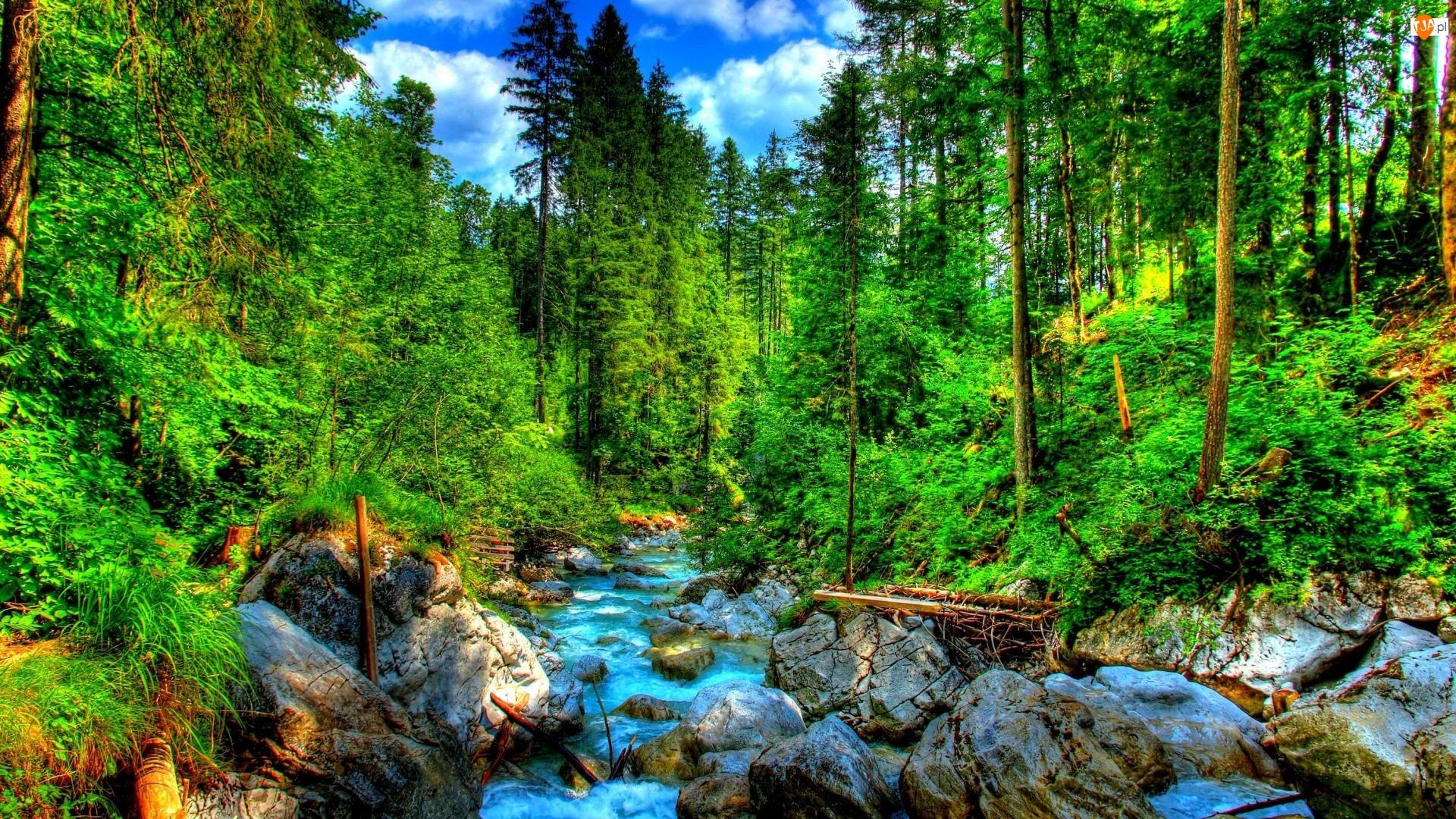 Las, HDR, Rzeka, Skały
