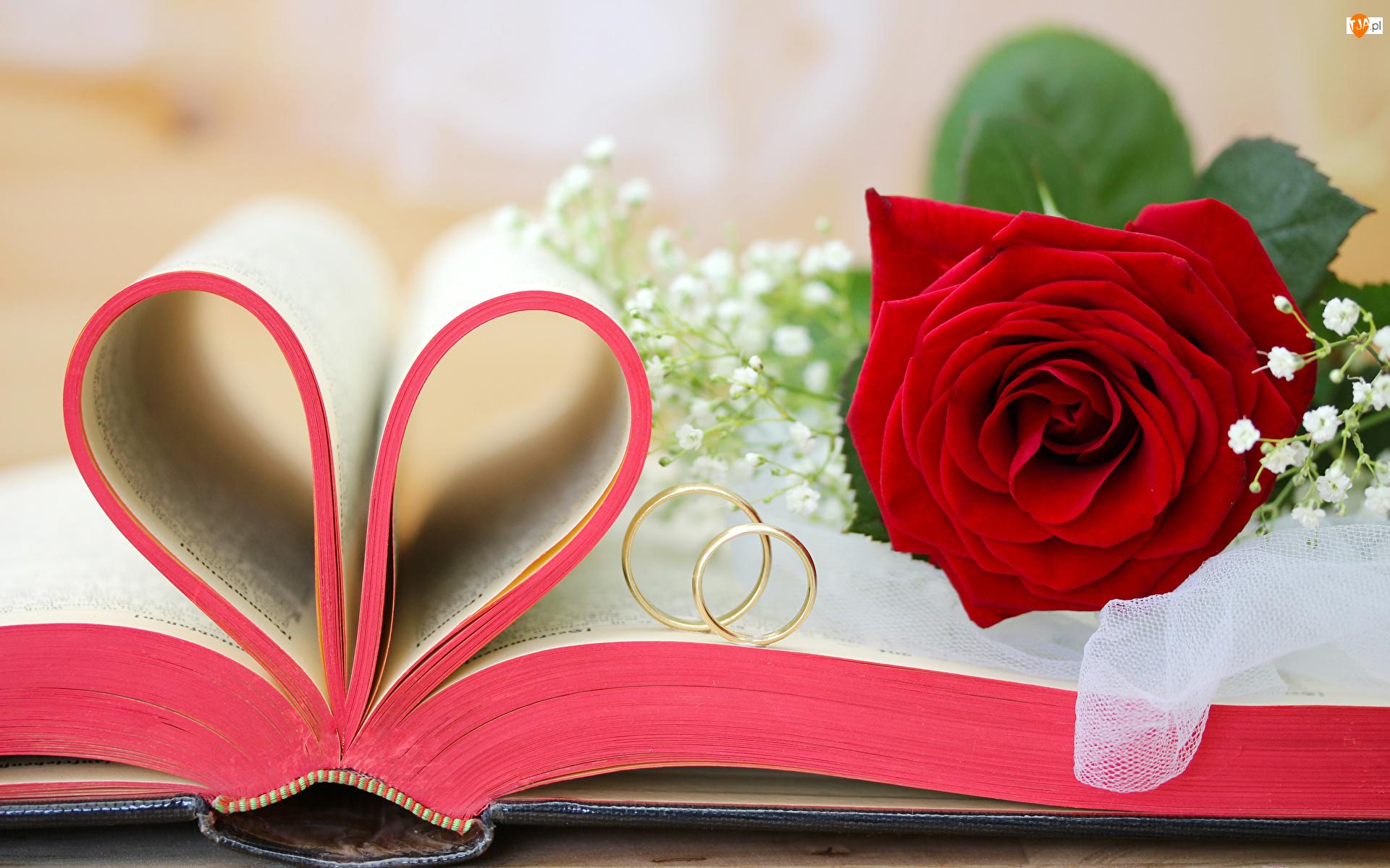 Ślub, Książka, Obrączki, Róża, Miłosne