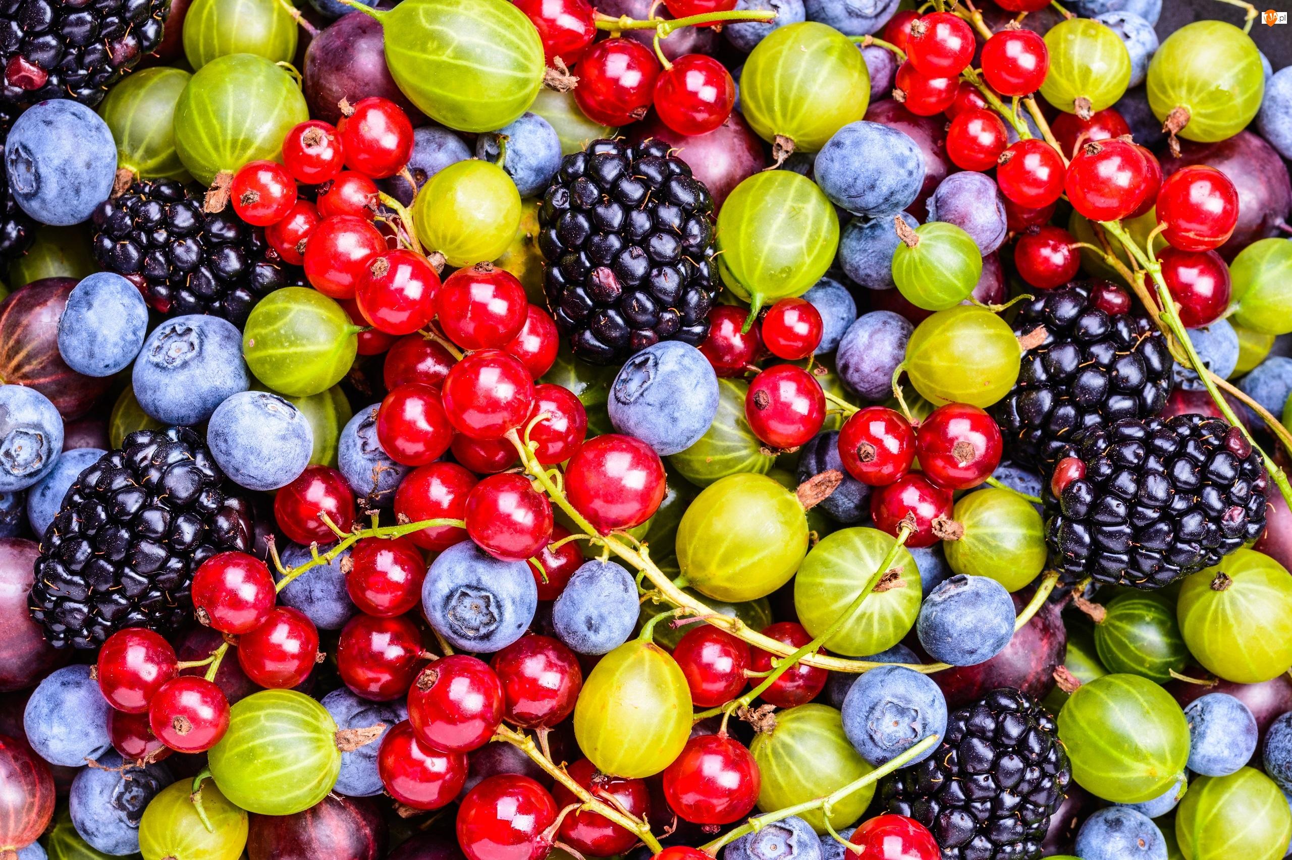Jeżyny, Owoce, Borówki, Porzeczki, Agrest