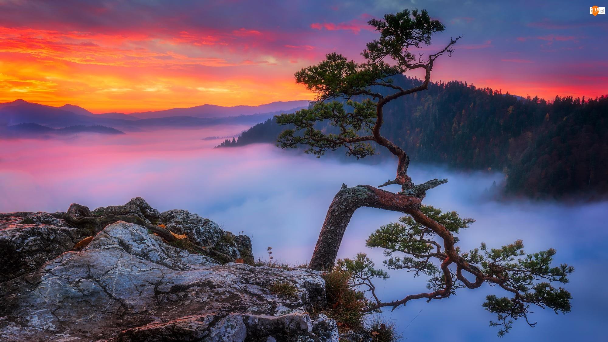 Sosna, Góry Pieniny, Drzewo, Mgła, Skały, Szczyt Sokolica, Pieniński Park Narodowy, Polska, Zachód słońca