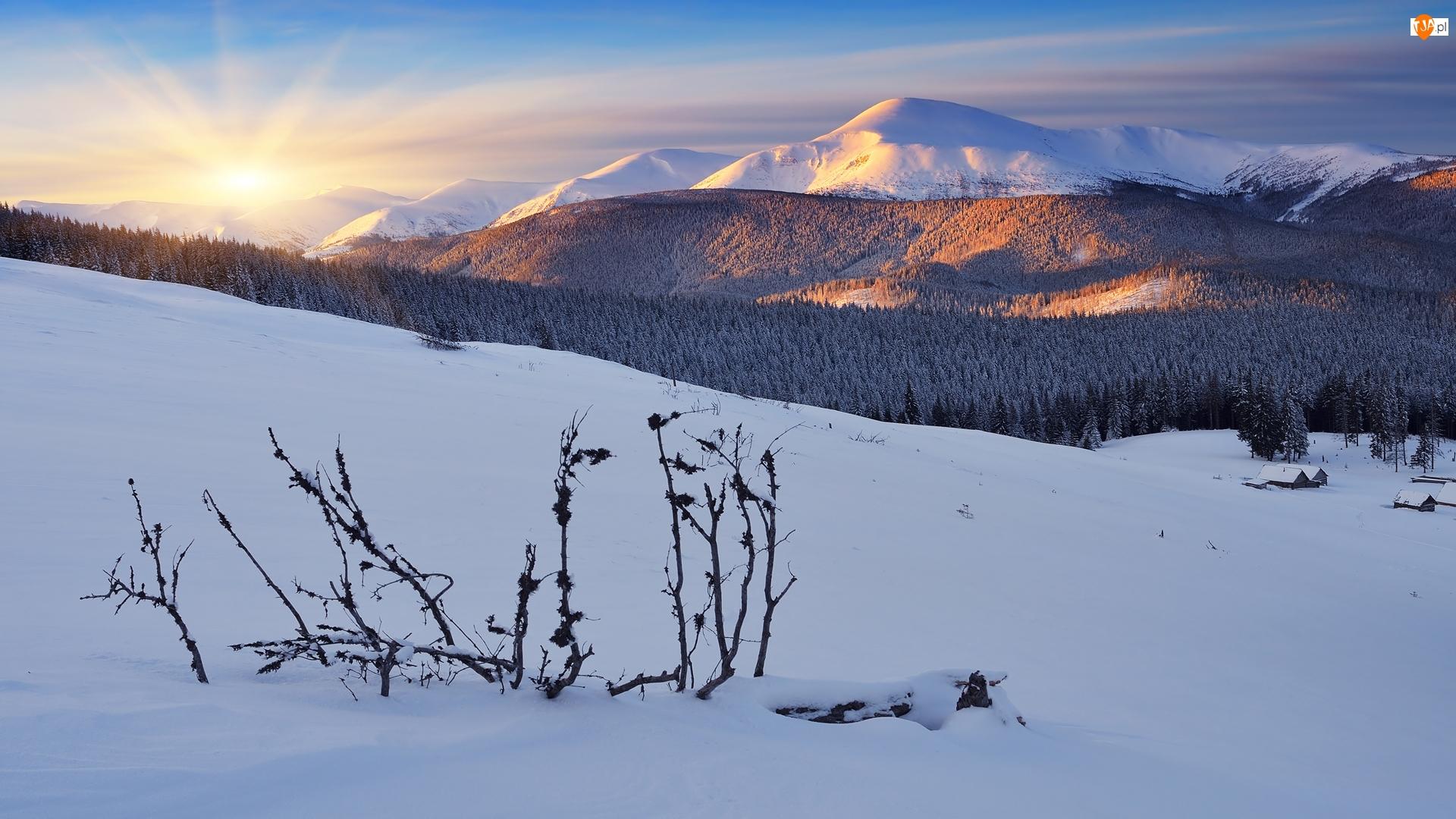 Las, Wschód słońca, Góry Karpaty, Ukraina, Zima