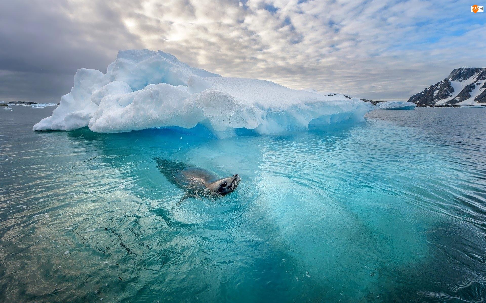 Foka, Morze, Zima