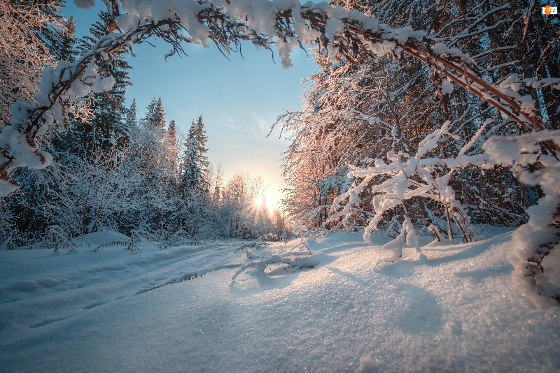Drzewa, Rosja, Zima, Droga, Kraj Permski, Las, Promienie słońca, Ural