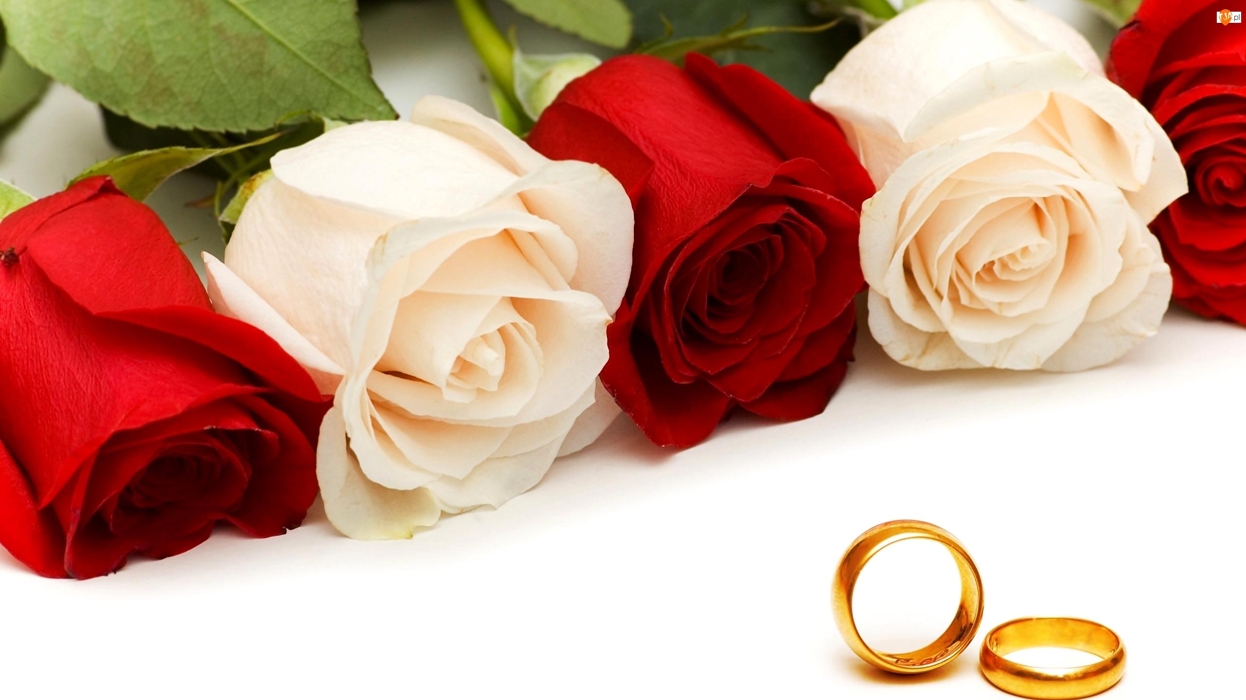 Obrączki, Róże, Białe, Czerwone