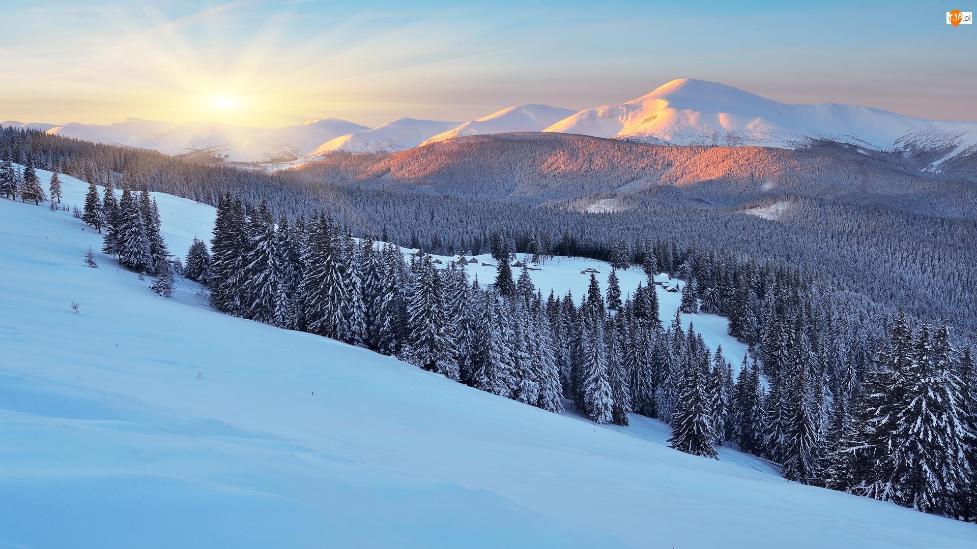 Zima, Ukraina, Drzewa, Wschód słońca, Góry Karpaty, Las