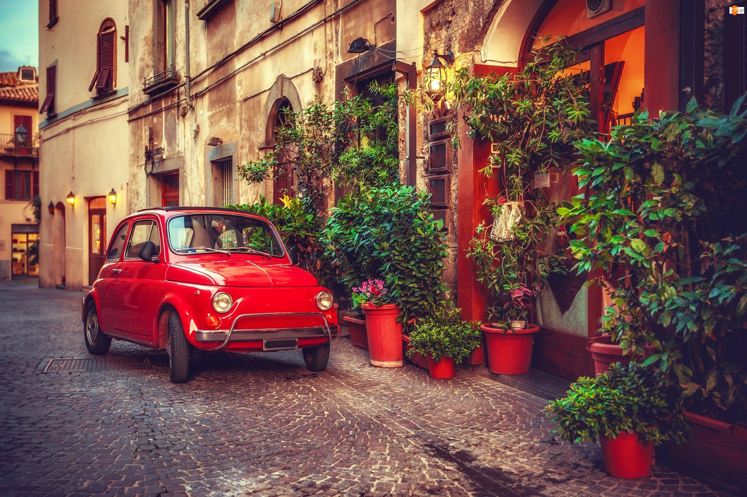 Rośliny, Fiat 500, Ulica