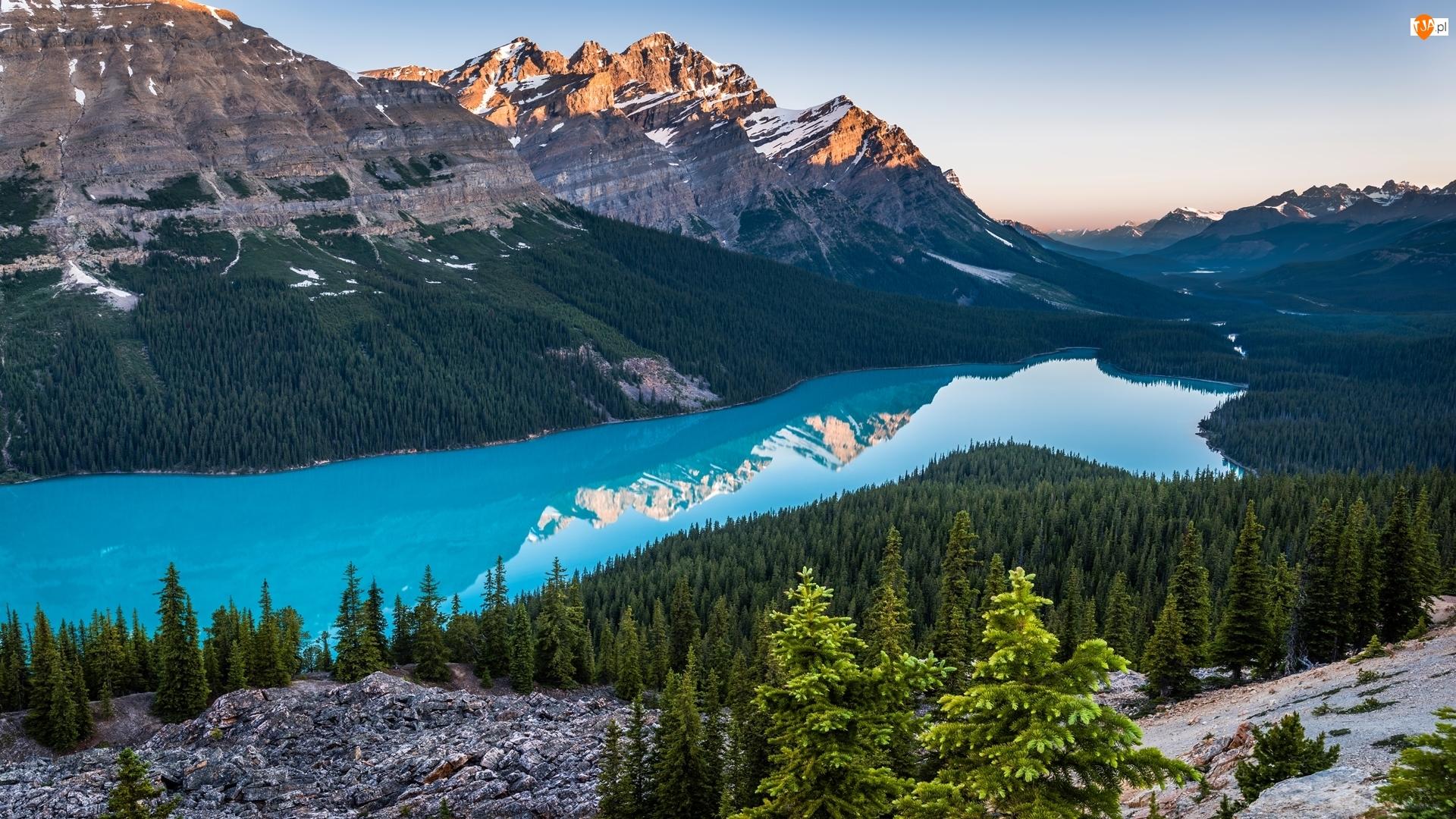 Jezioro Peyto Lake, Lasy, Park Narodowy Banff, Kanada, Góry Canadian Rockies