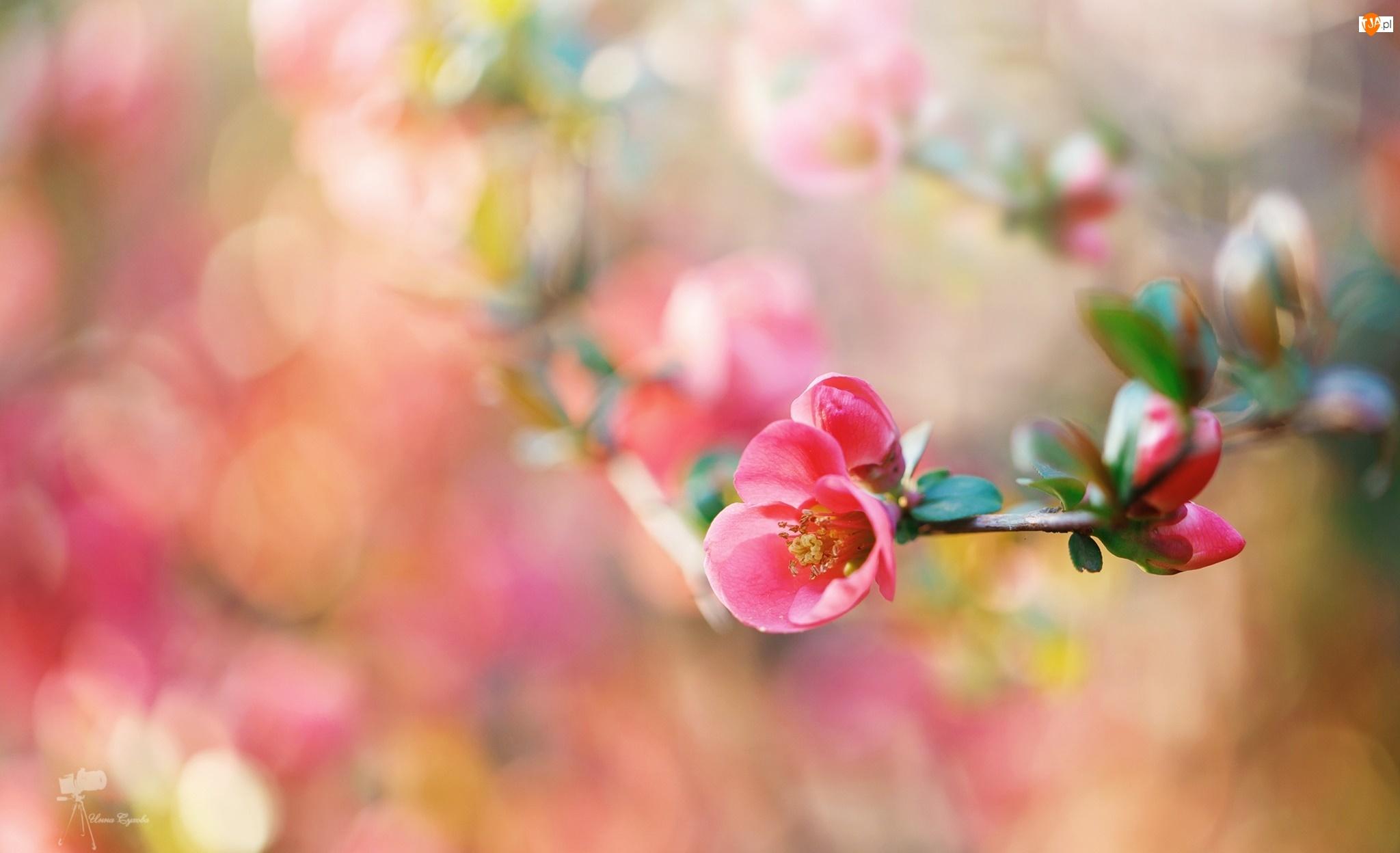 Kwiat, Gałązka, Różowy