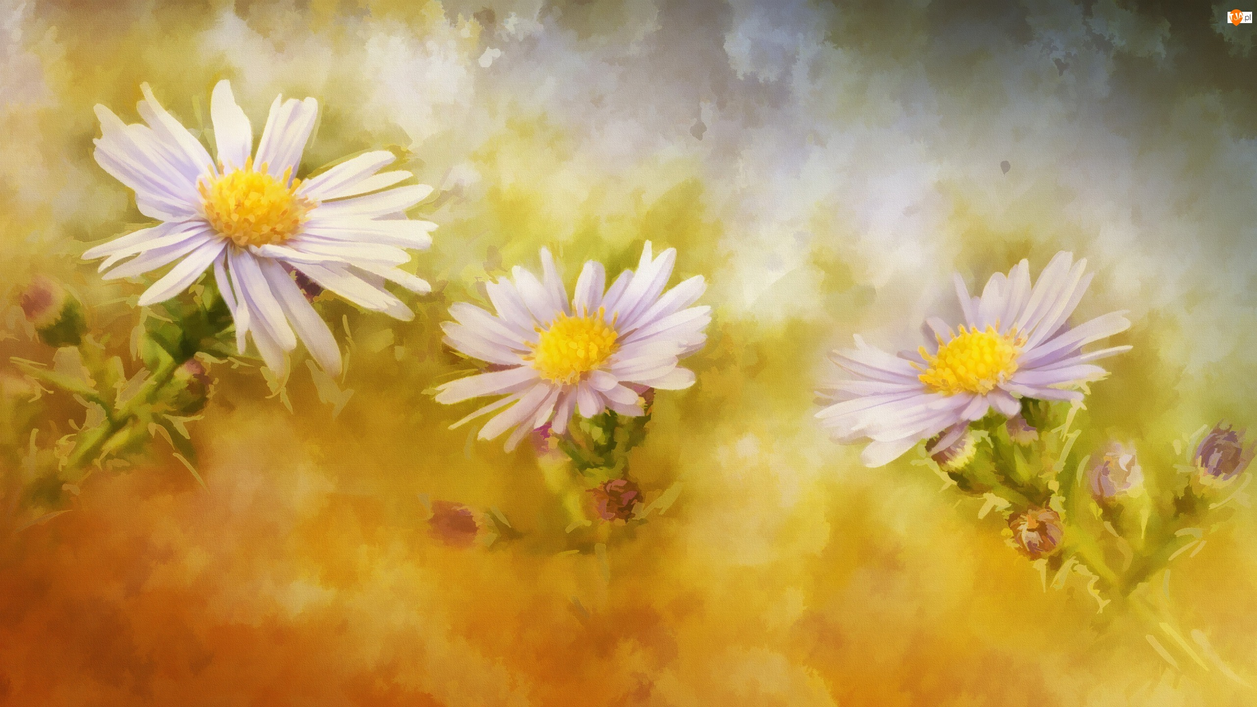 Astry, Reprodukcja, Obraz, Kwiaty