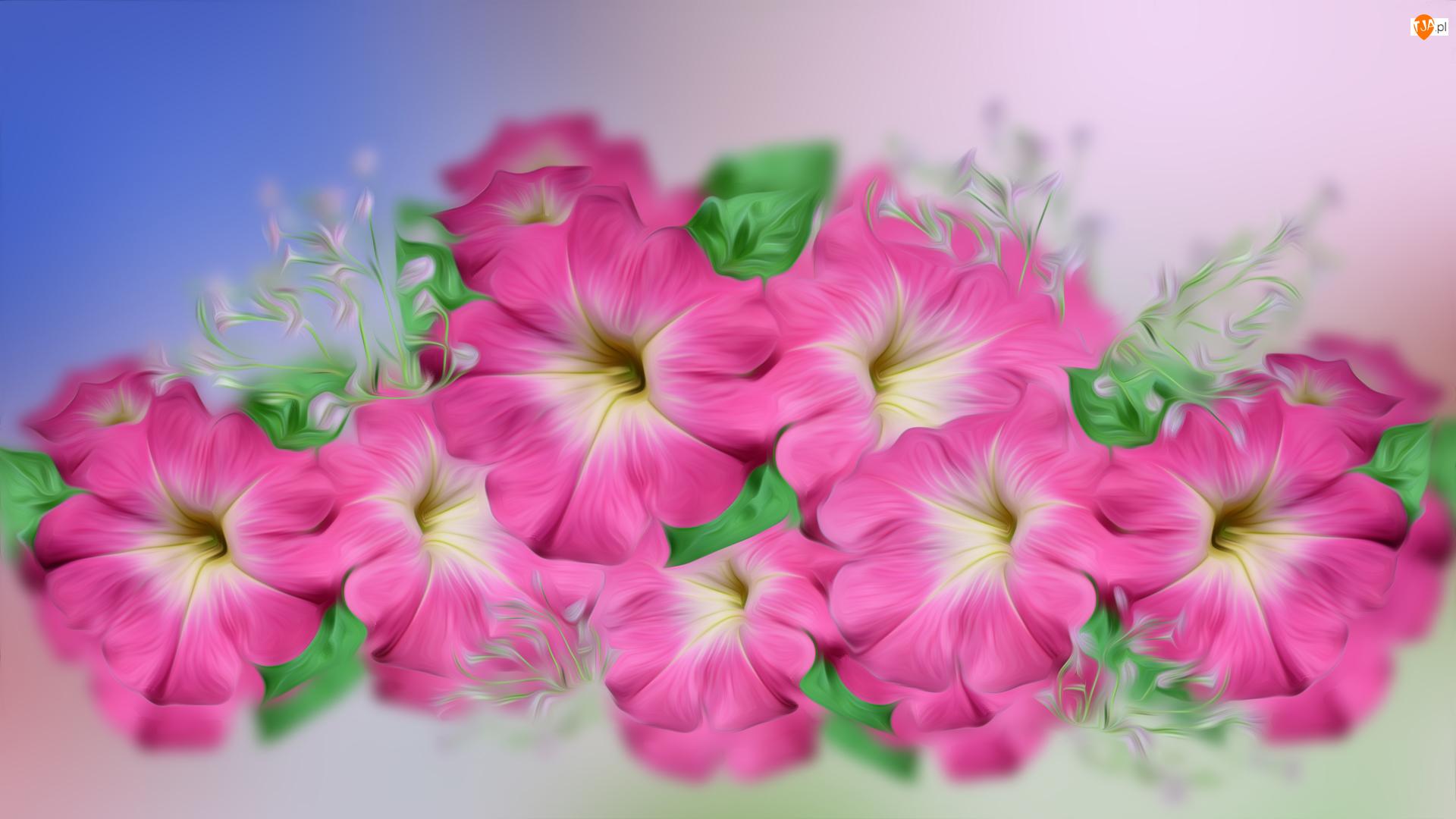 Grafika 2D, Kwiaty, Surfinia