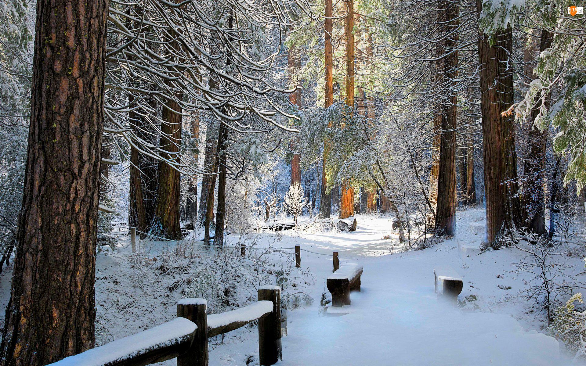 Drzewa, Drzewa, Las, Zima, Ławki