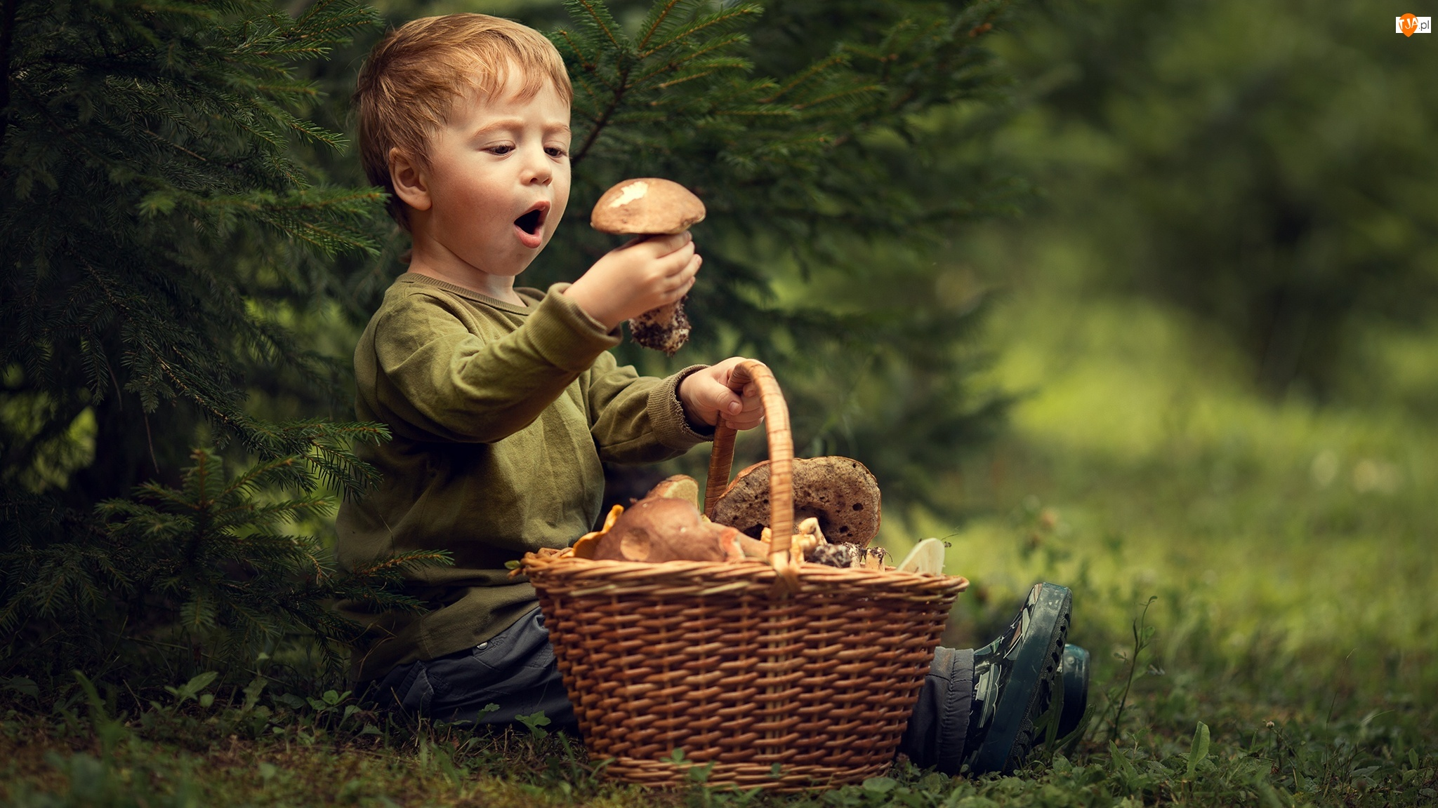 Chłopiec, Dziecko, Grzyby, Trawa, Koszyk, Drzewko