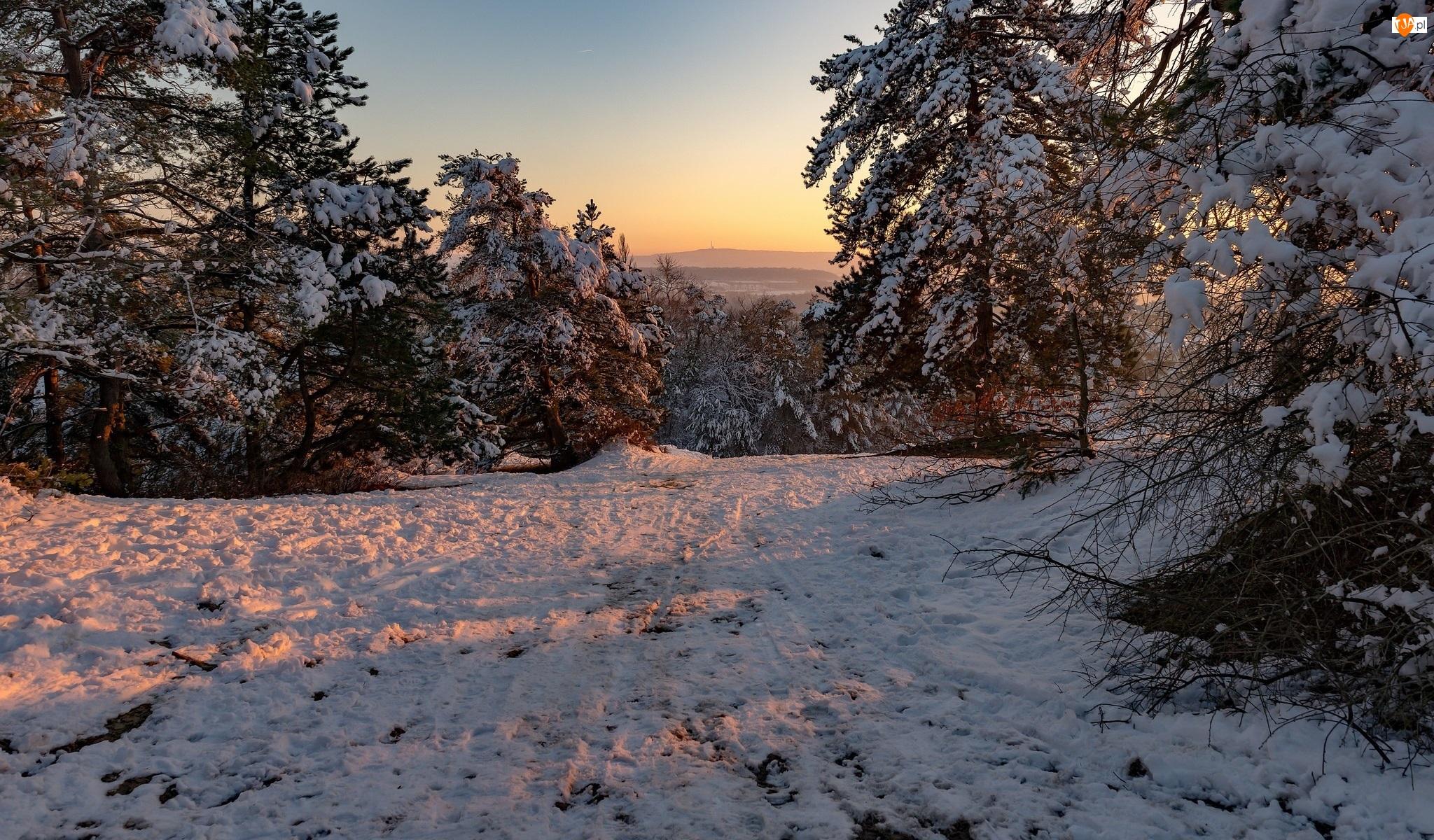 Zachód słońca, Zima, Drzewa, Ośnieżone