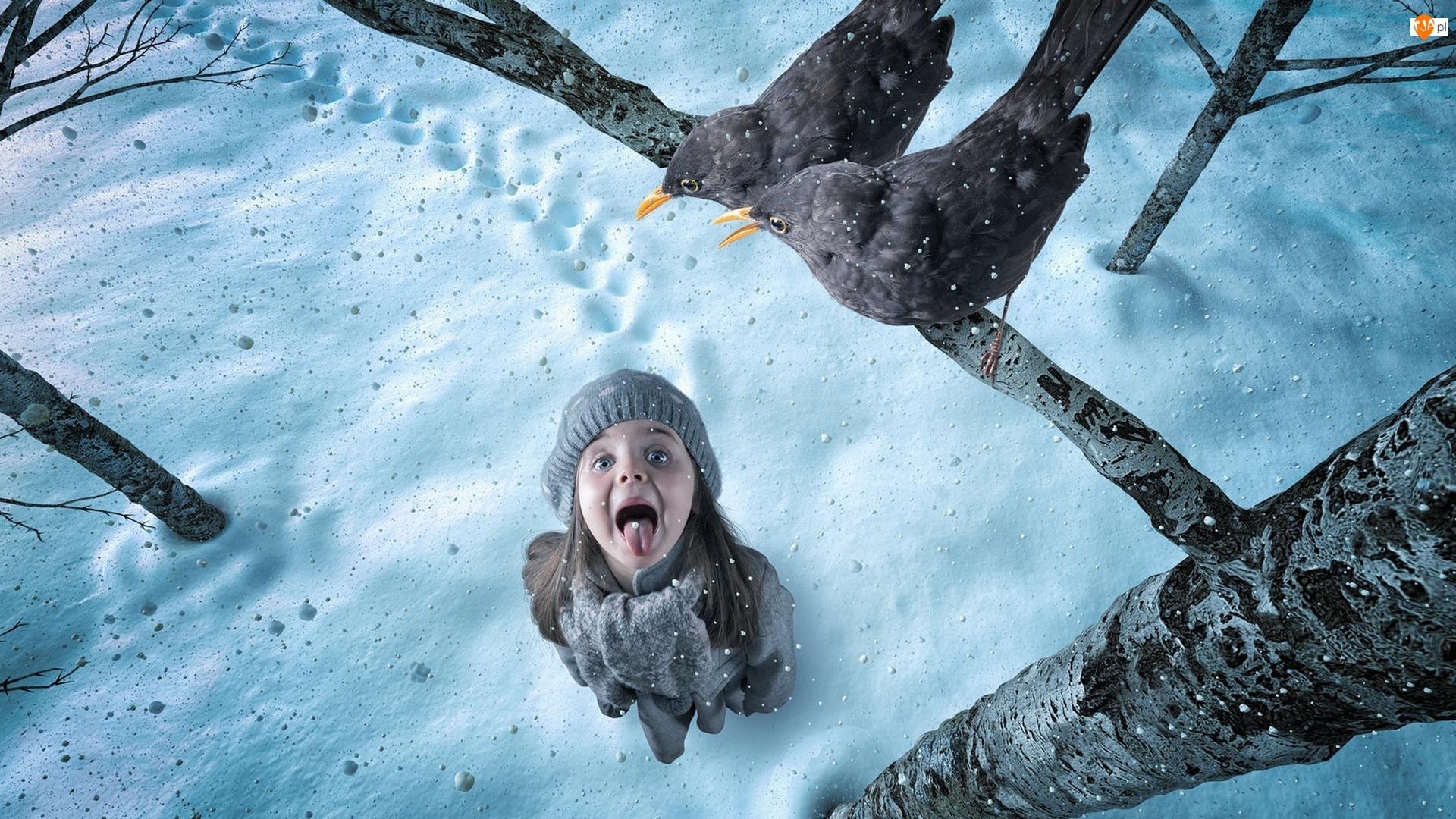 Kosy, Ptaki, Dziewczynka, Śnieg, Gałąź, Zima