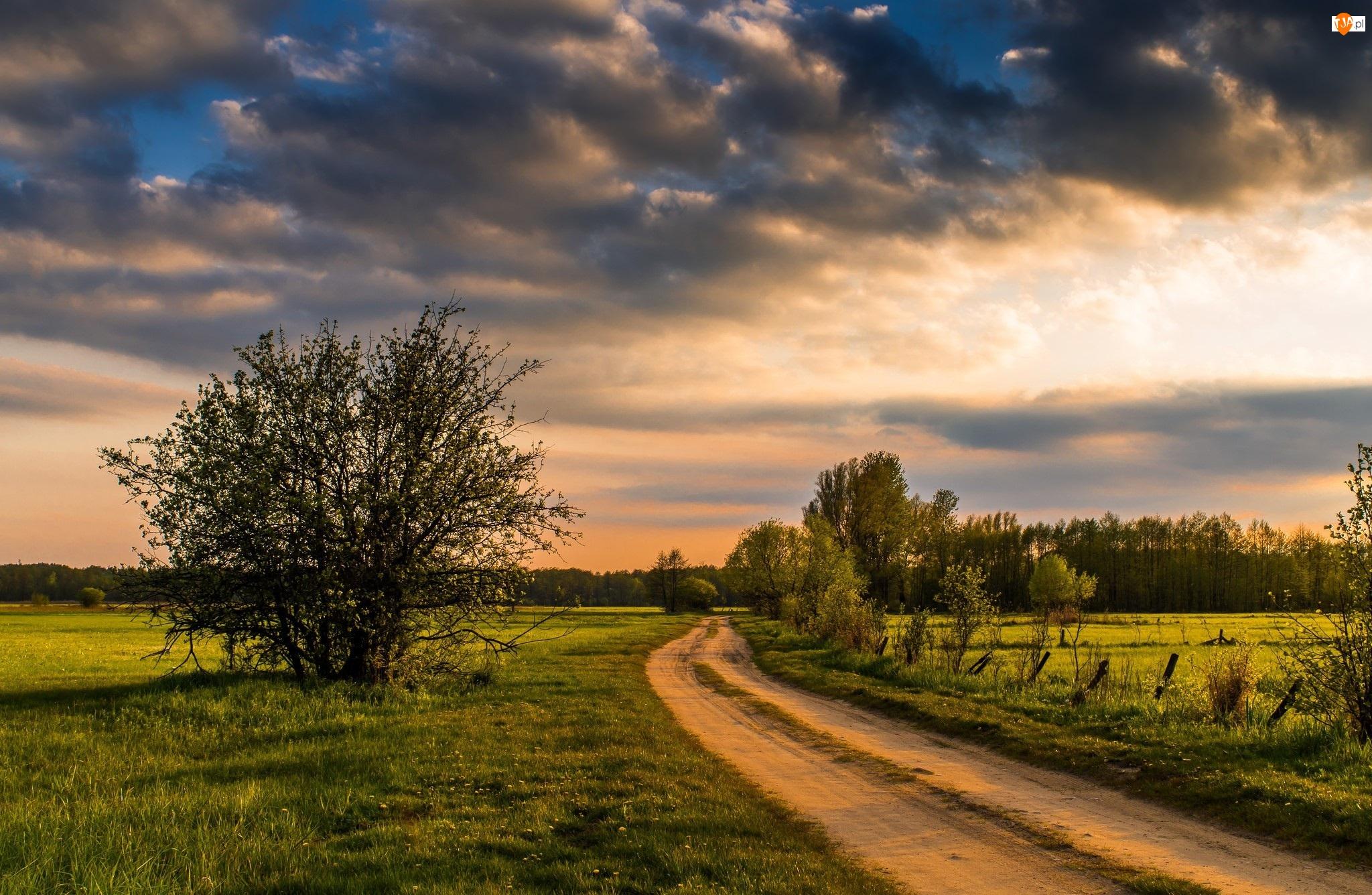 Drzewa, Chmury, Droga, Wiejska, Ciemne