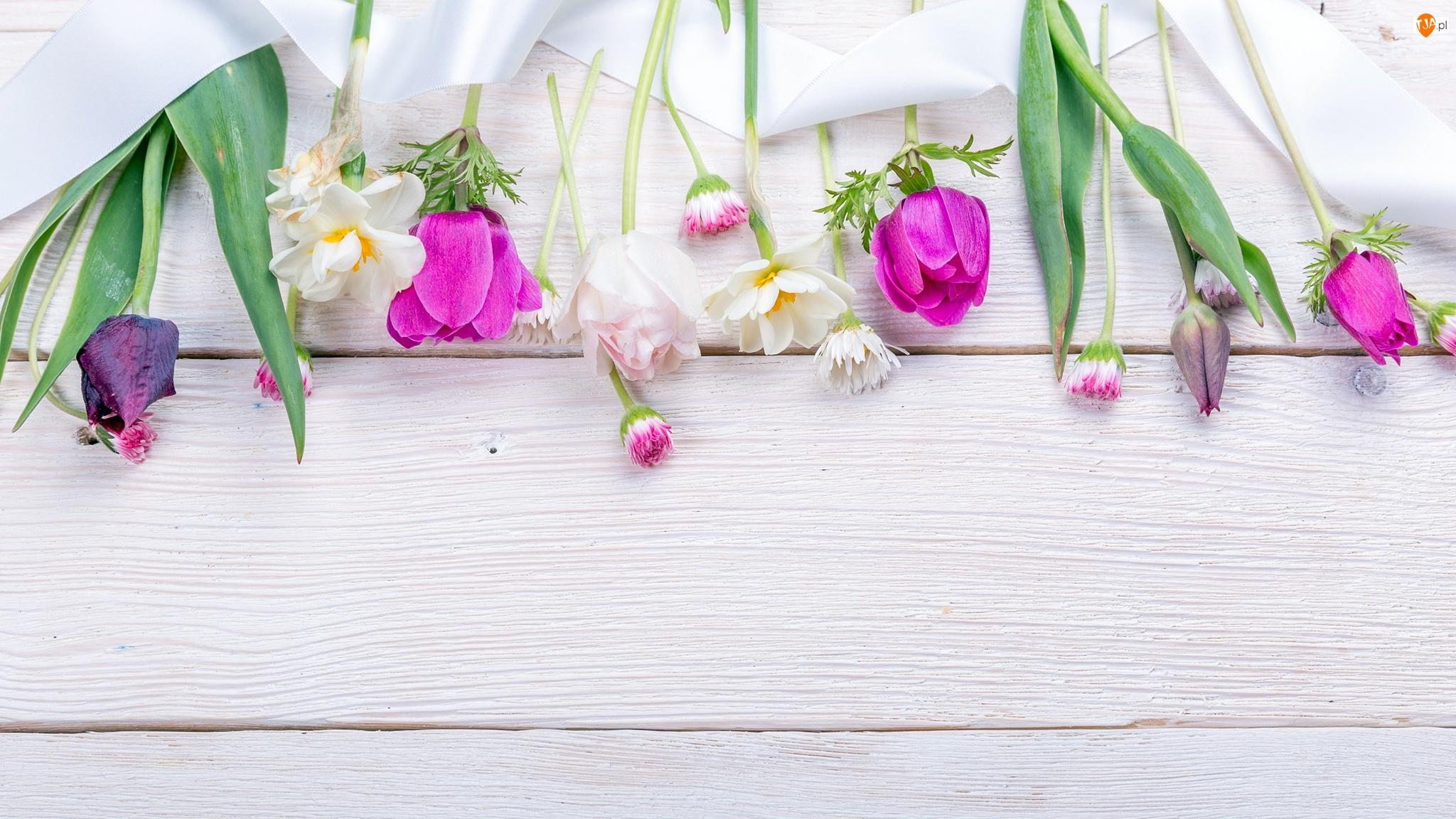 Tulipany, Zawilce, Kwiaty, Wiosenne, Stokrotki