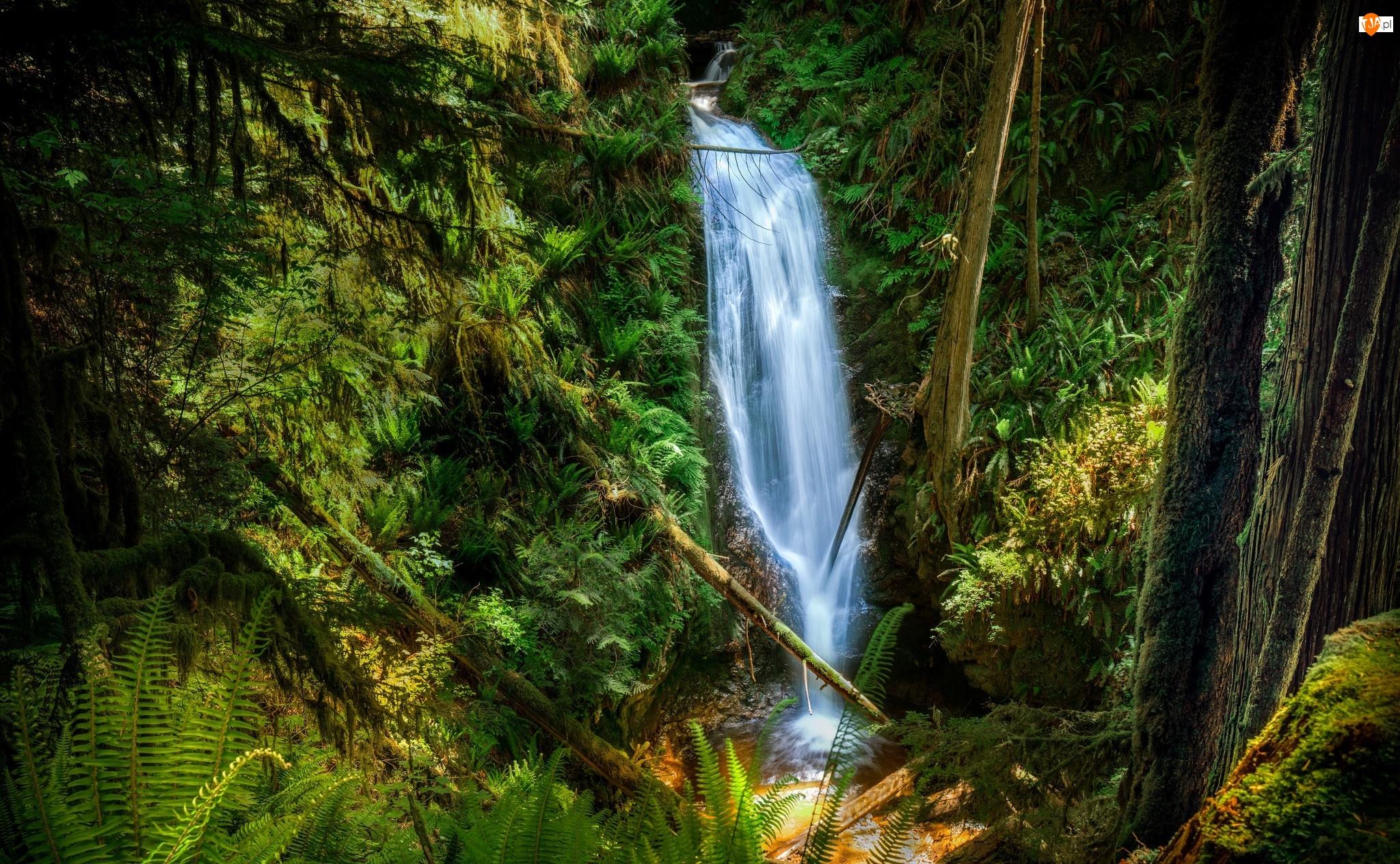 Dżungla, Wodospad, Las