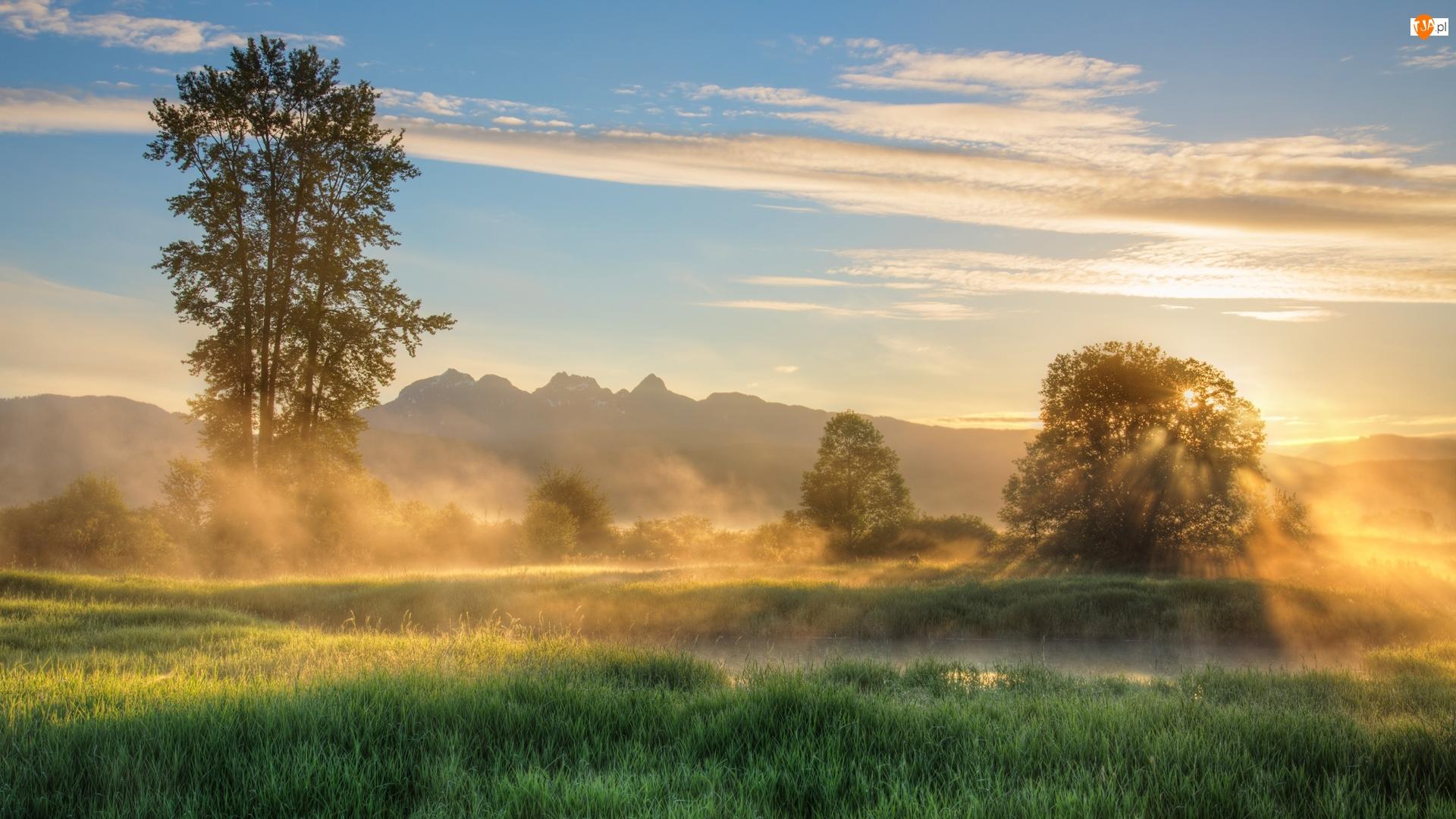 Mgła, Kanada, Jerry Sulina Park, Wschód słońca, Kolumbia Brytyjska, Drzewa, Wzgórza, Maple Ridge