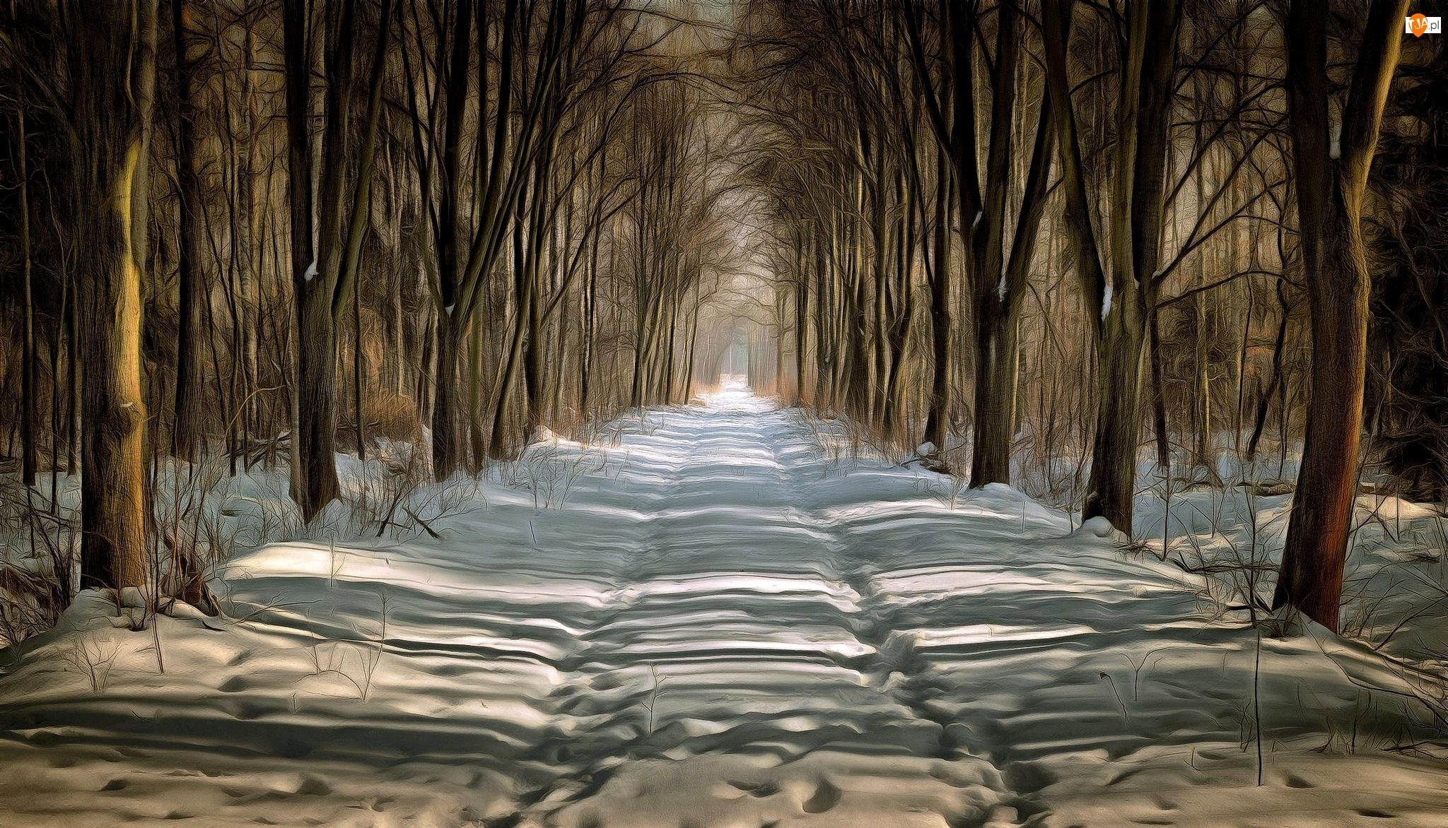 Drzewa, Grafika, Las, Zima, Droga