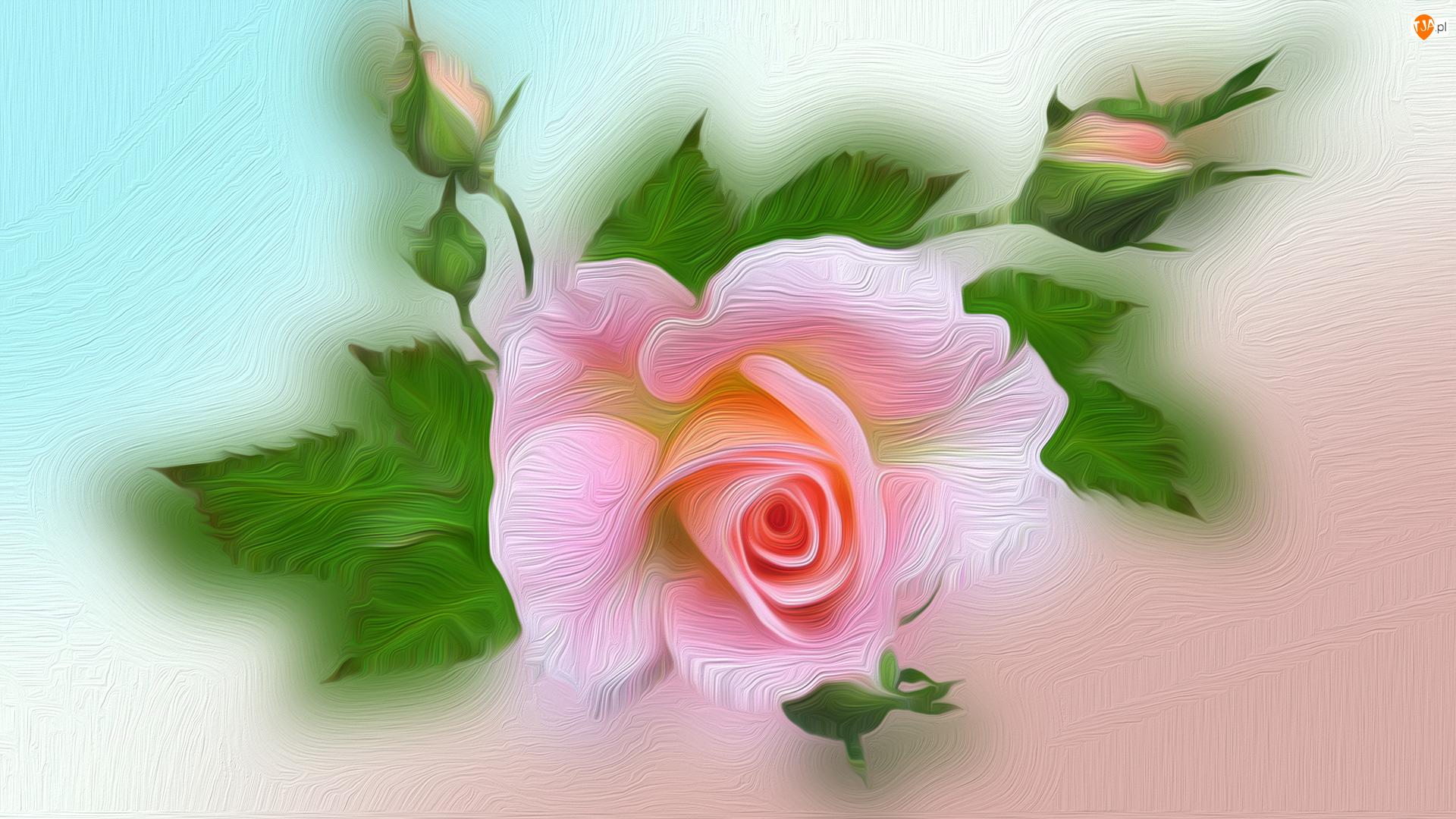 2D, Różowa, Róża, Pąki