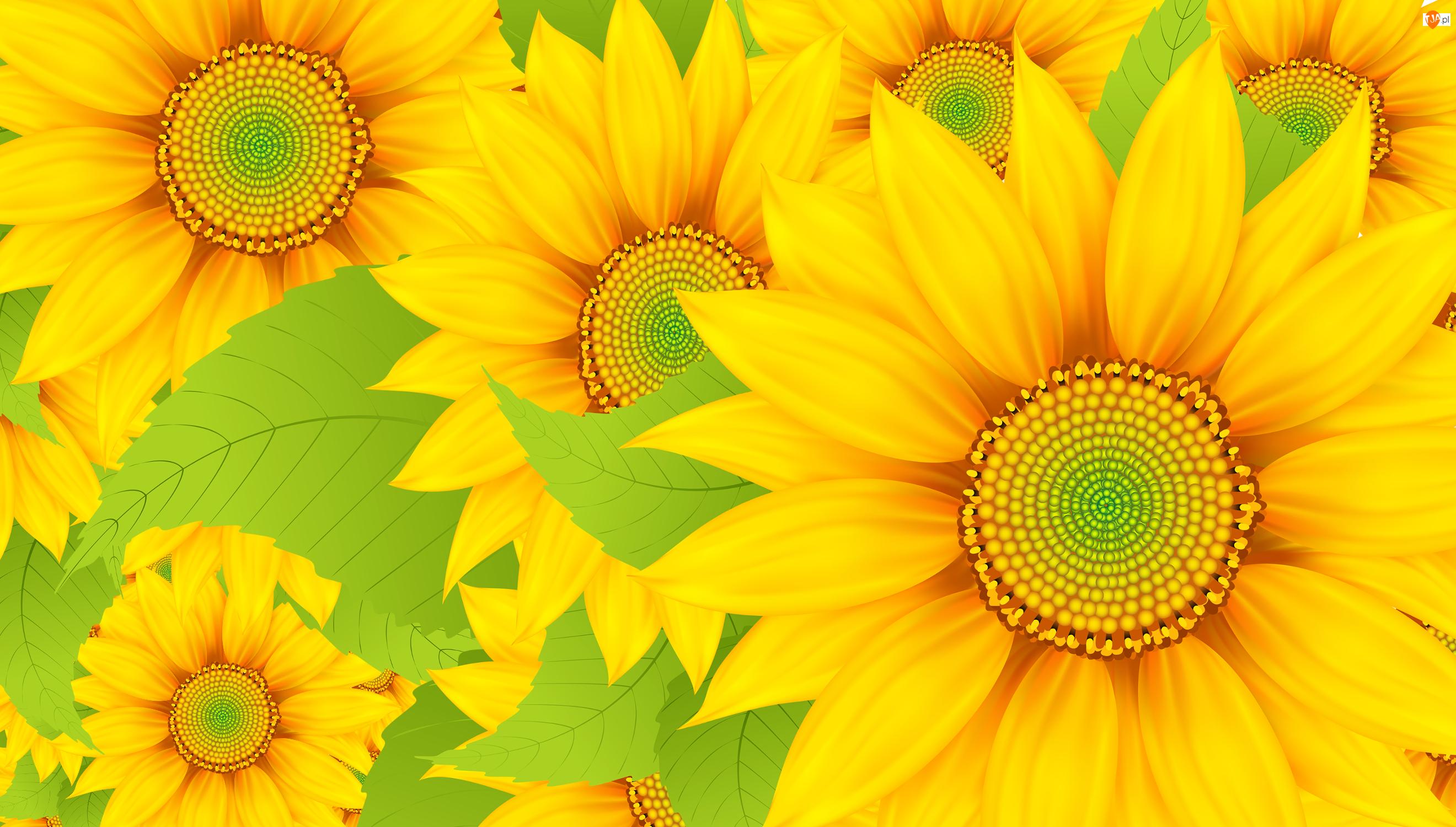 Słoneczniki ozdobne, Grafika 2D