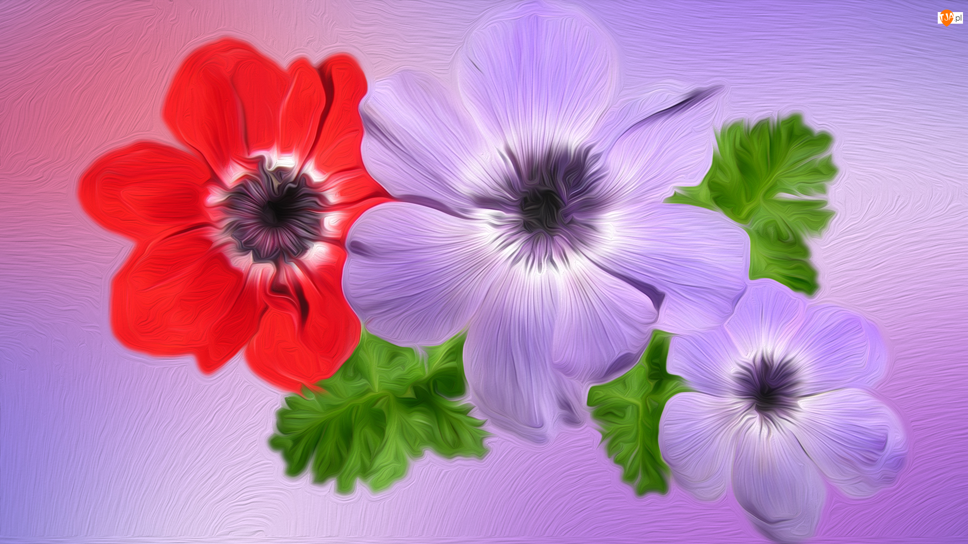 Zawilce, Kwiaty