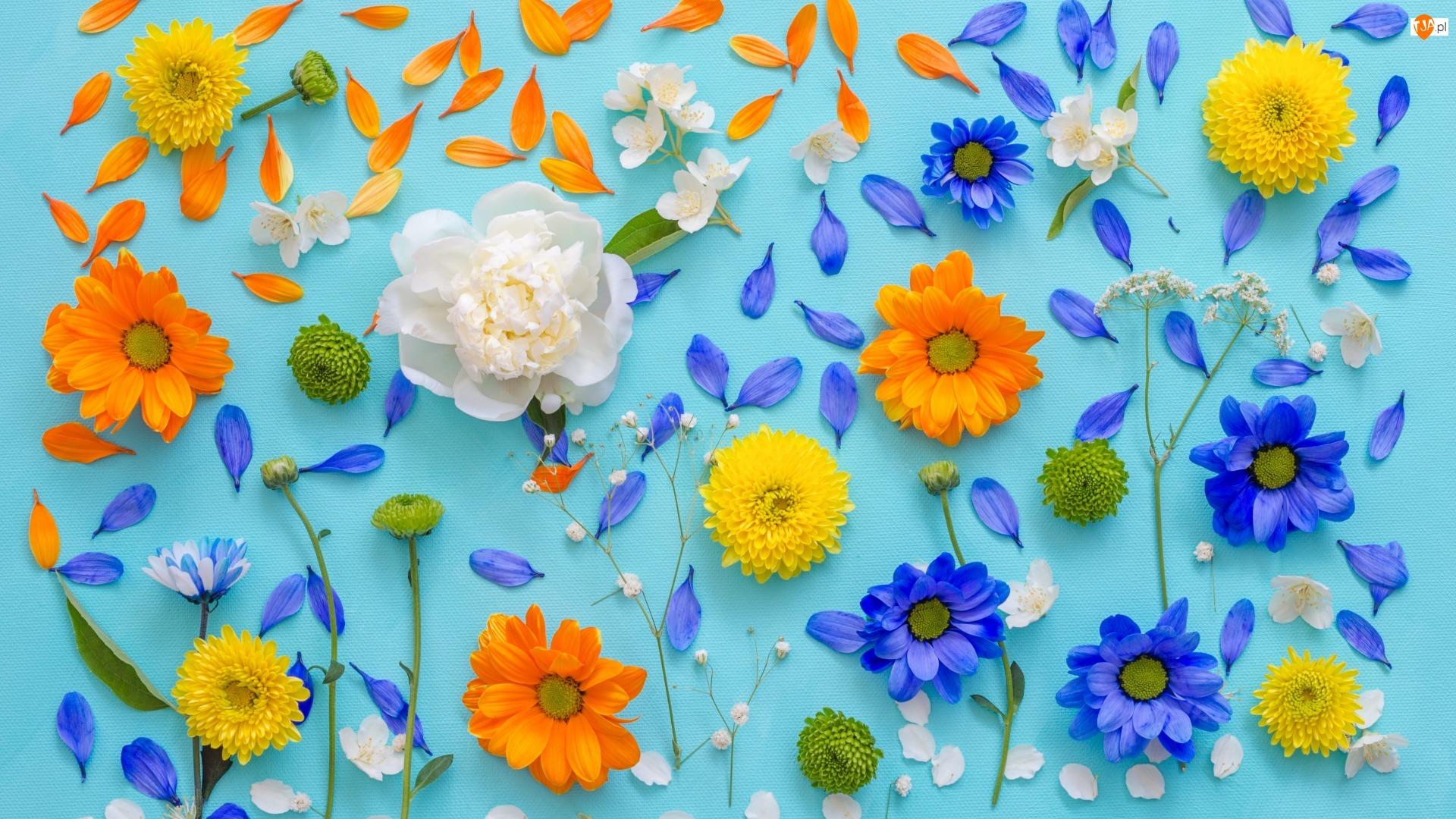 Niebieskie tło, Kolorowe, Płatki, Kwiaty