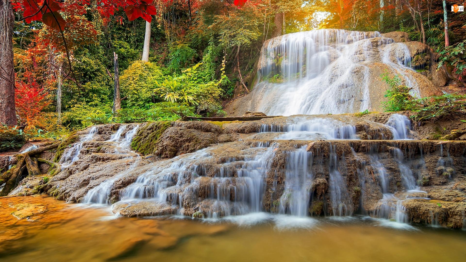 Roślinność, Wodospad, Kaskady, Drzewa