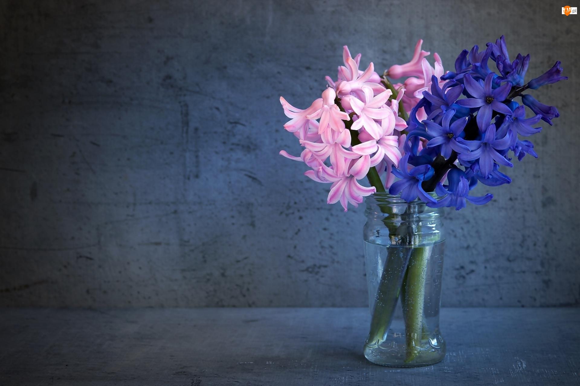 Słoik, Różowe, Niebieski, Hiacynt