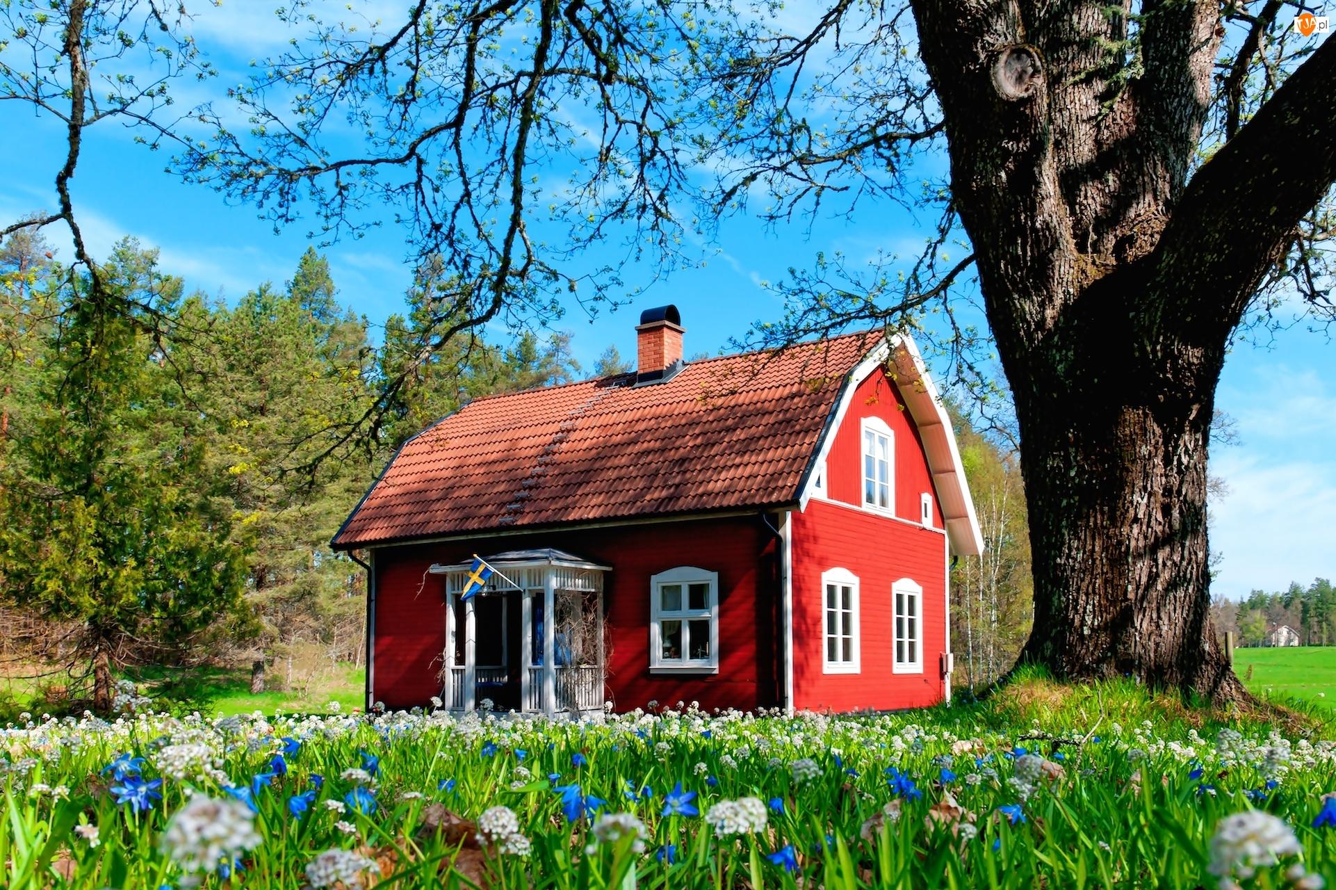 Drzewa, Czerwony, Domek, Kwiaty