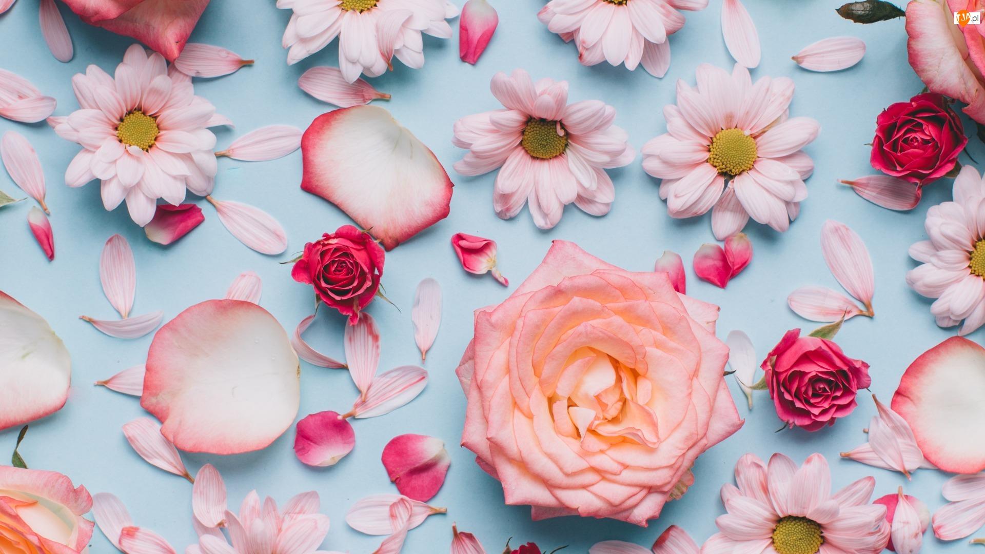 Kwiaty, Róże, Chryzantemy, Płatki