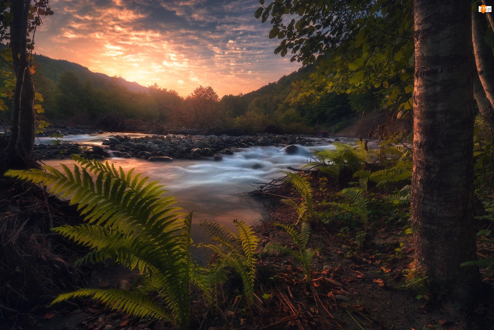 Kamienie, Paprocie, Rzeka, Zachód słońca, Drzewa