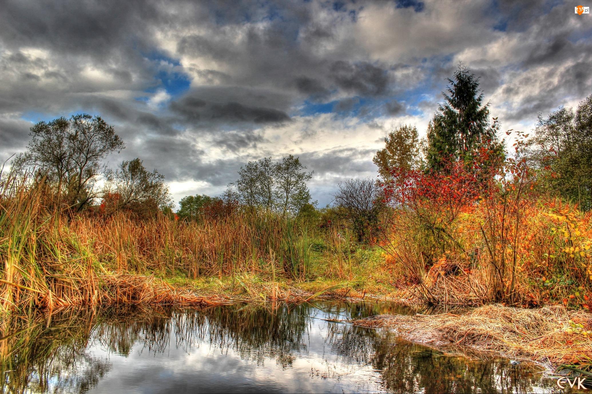 Drzewa, Odbicie, Bagna, Jesień