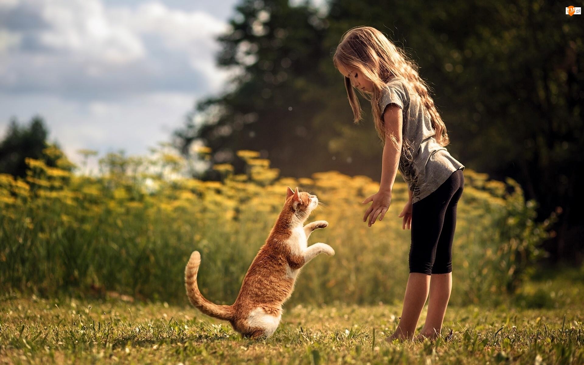 Zabawa, Dziewczynka, Kot