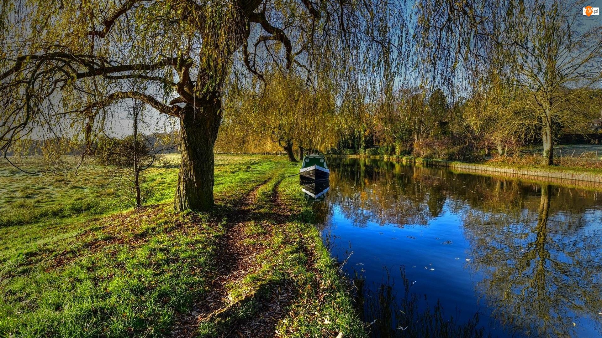 Drzewa, Park, Kanał, Łódka