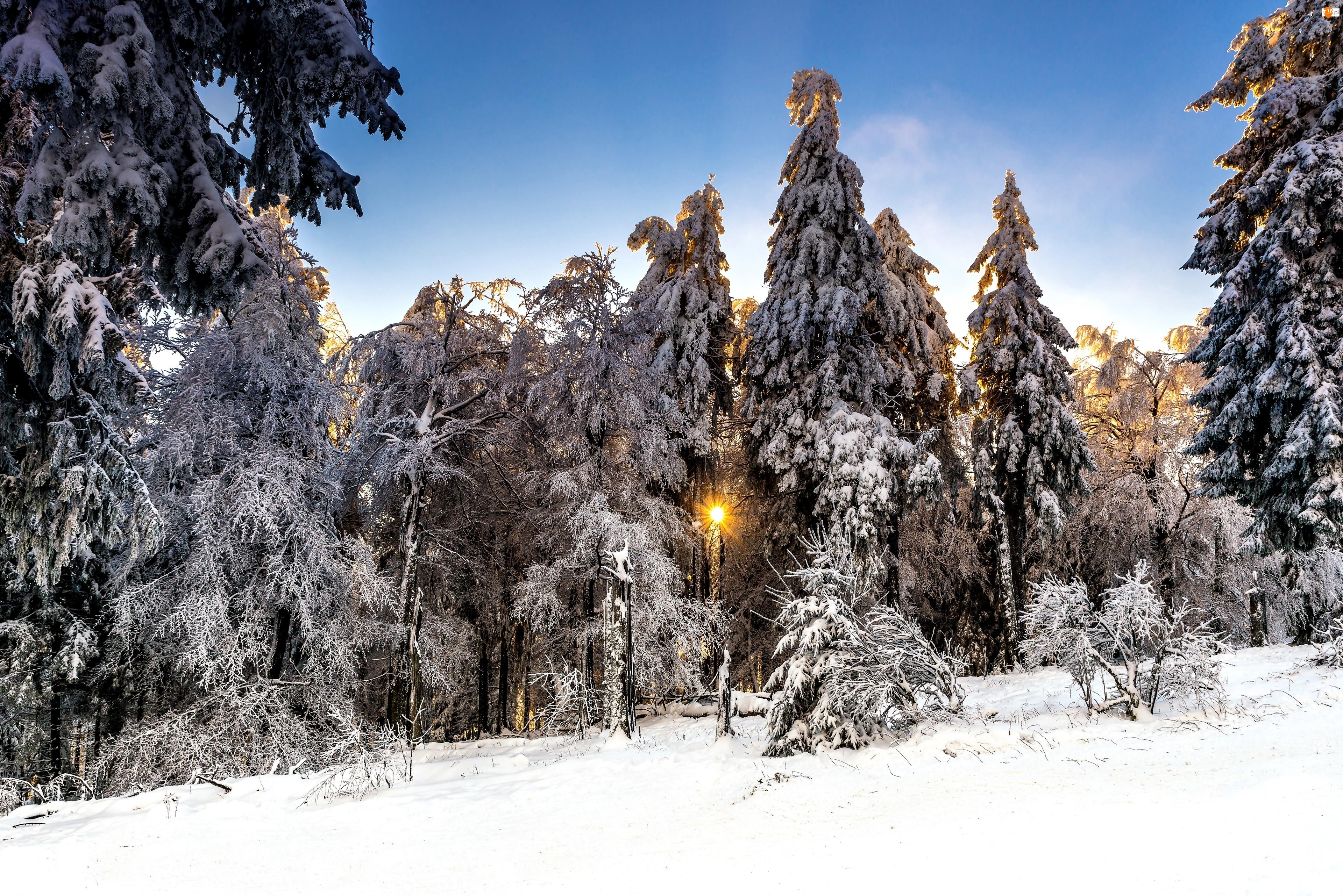 Słońce, Drzewa, Las, Zima, Ośnieżone