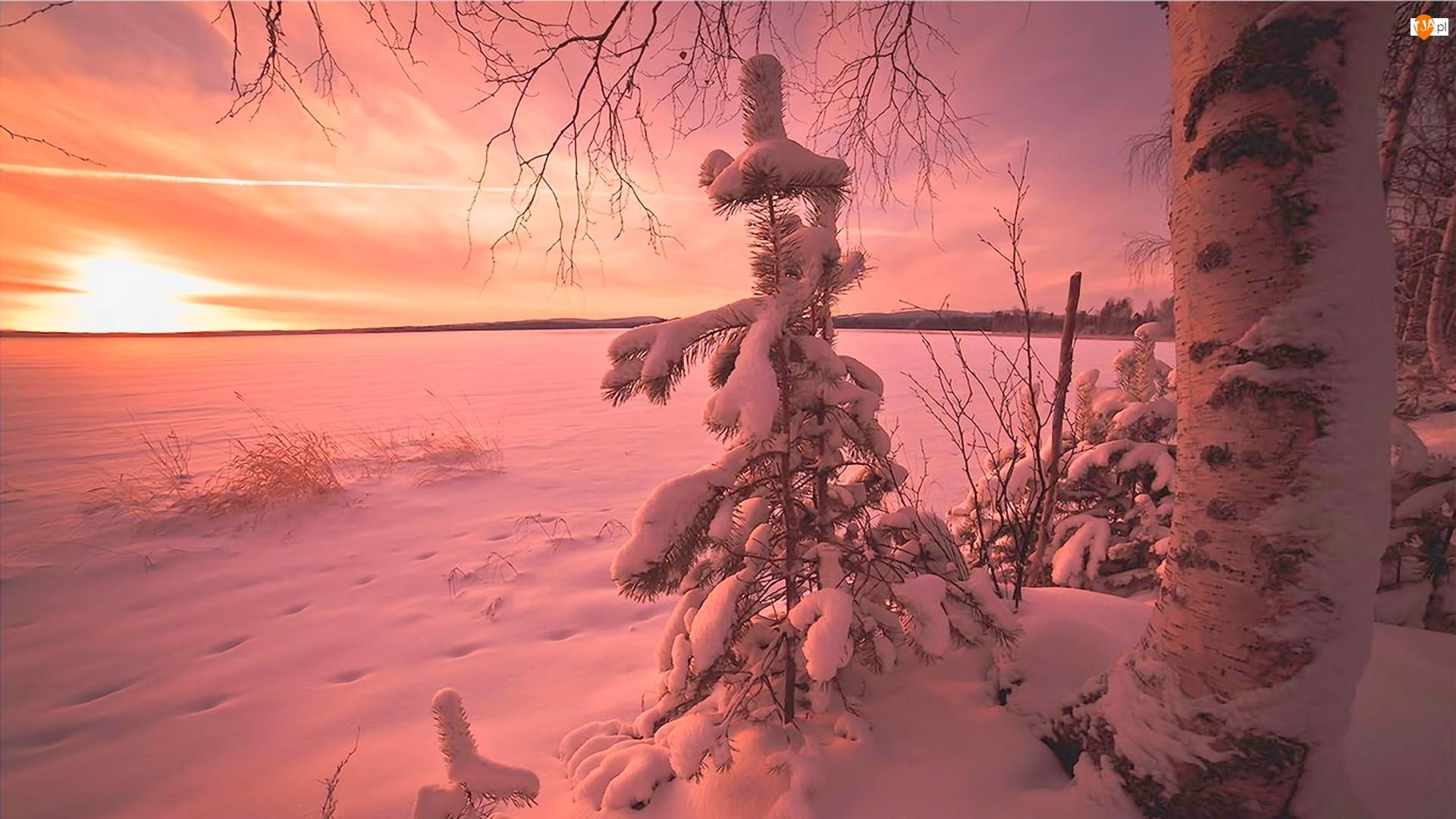 Słońce Zachodzące, Zima, Świerk