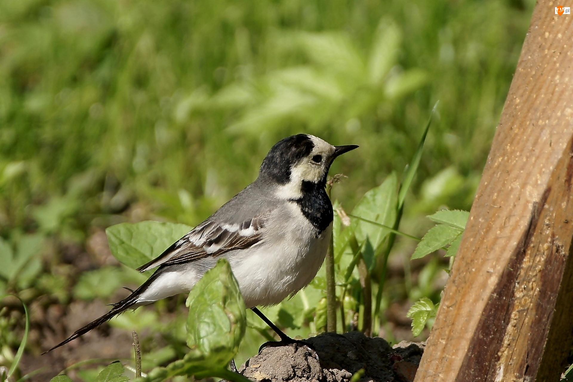 Roślinki, Ptak